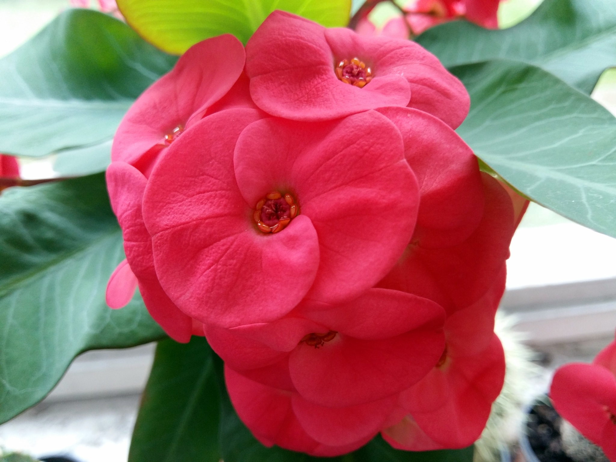 Red flower by uzkuraitiene62