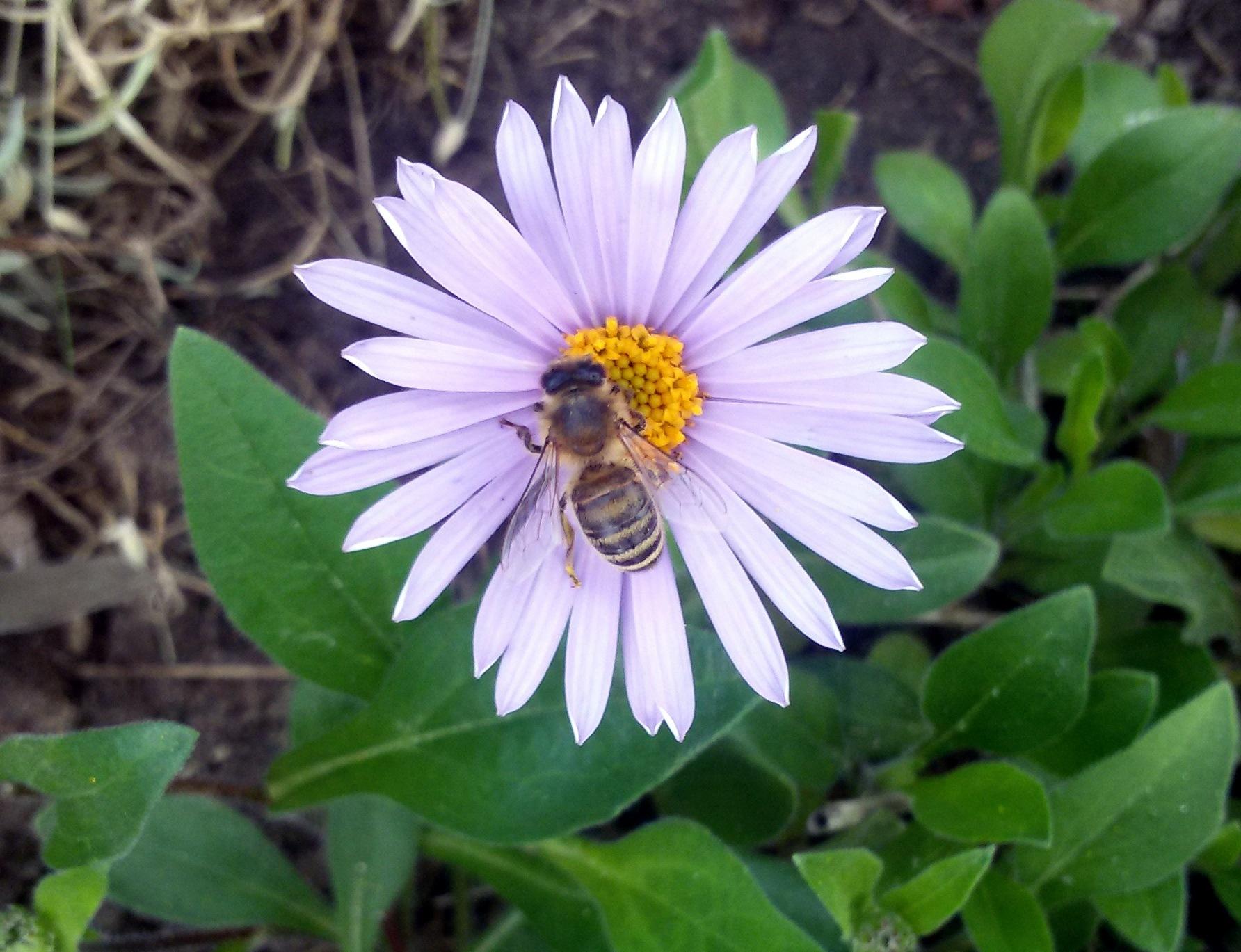 Flower with bee. by uzkuraitiene62