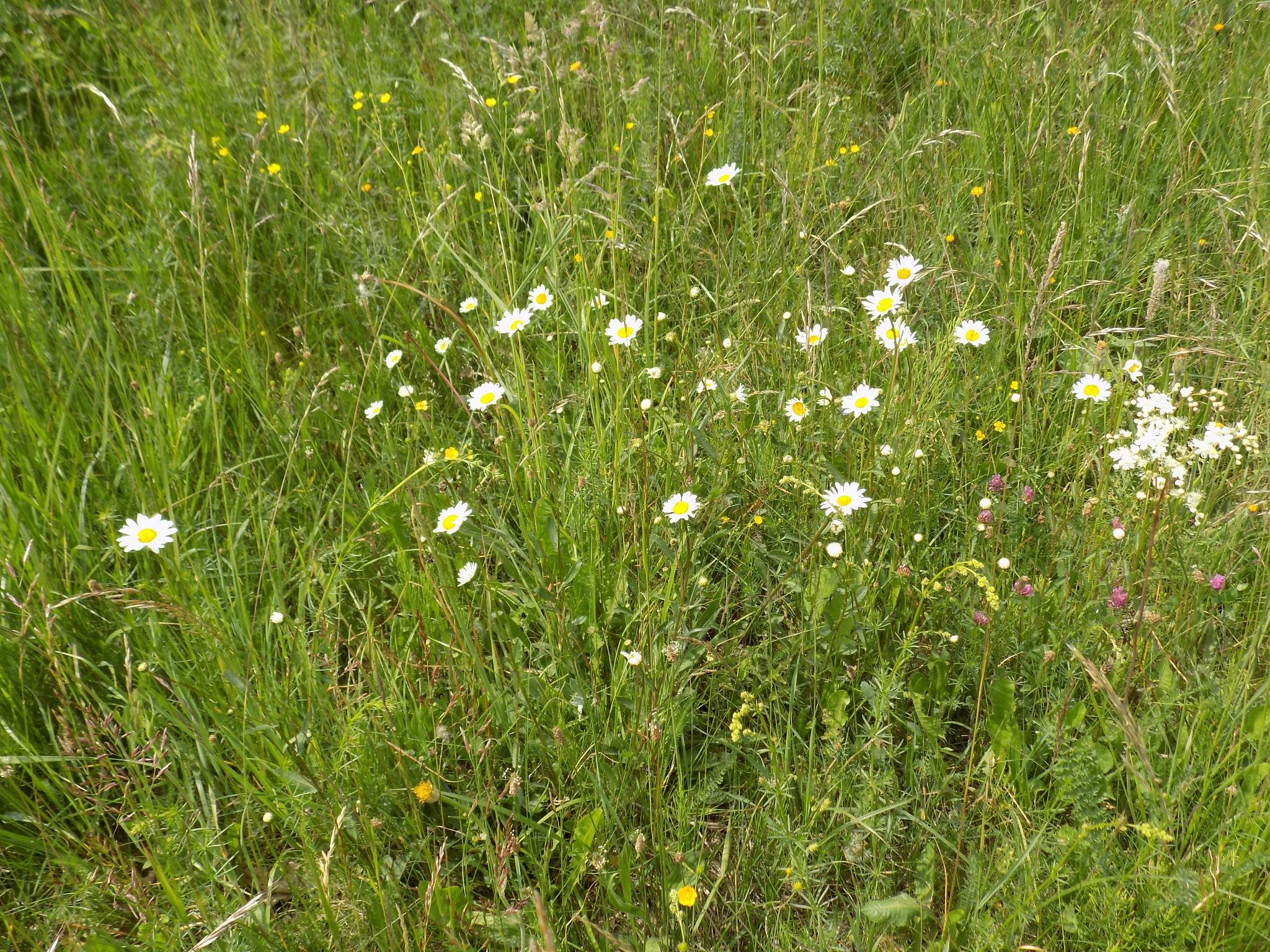 Meadow. by uzkuraitiene62