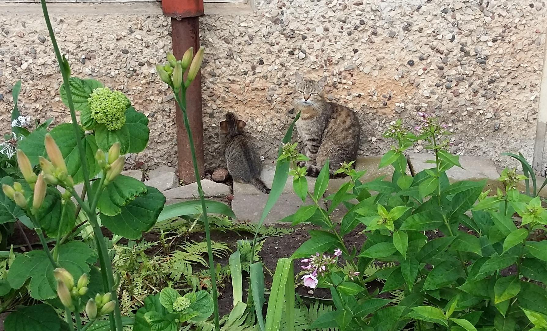 Cats by uzkuraitiene62