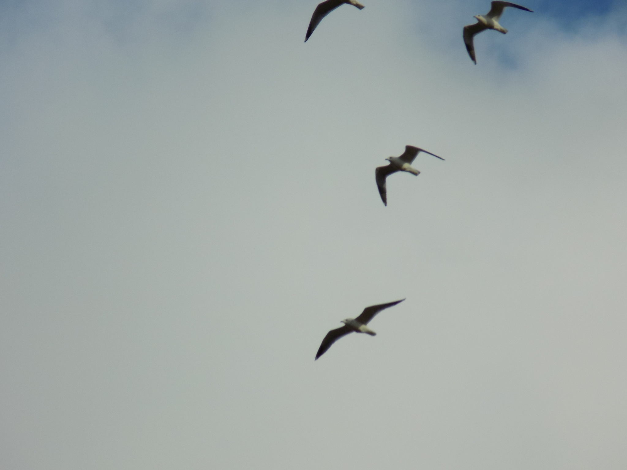 Flying birds by uzkuraitiene62