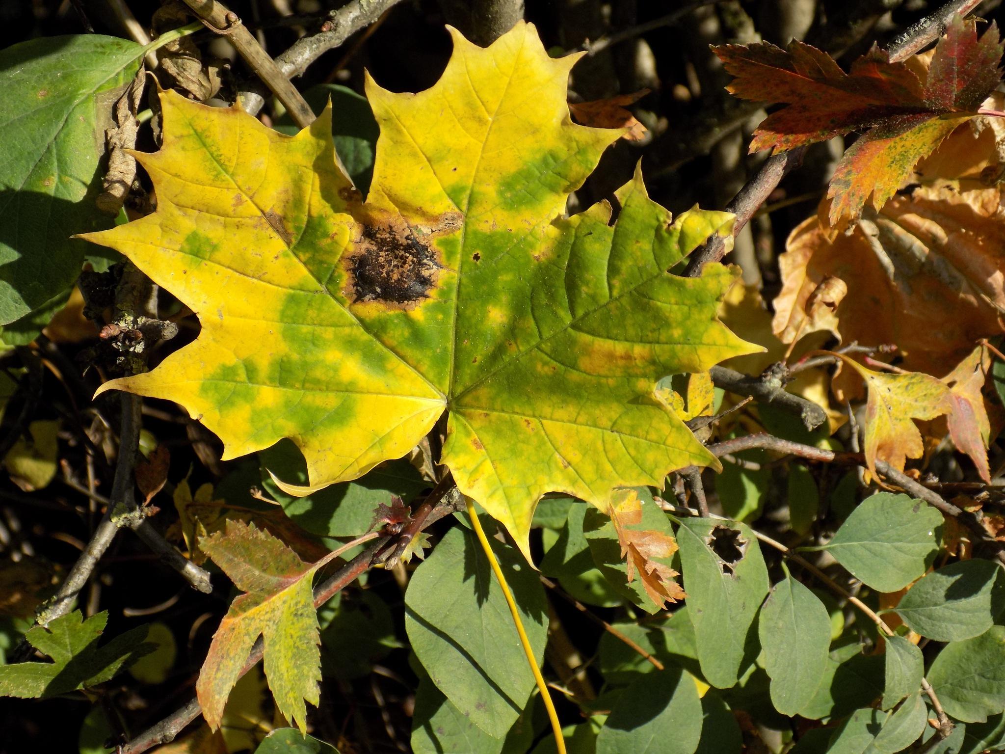 Autumn colors by uzkuraitiene62