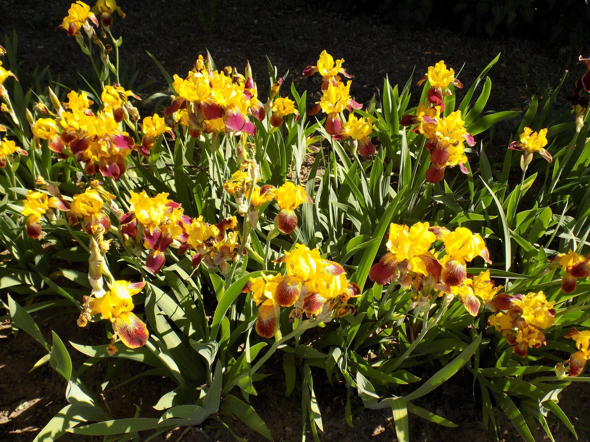 In the spring by uzkuraitiene62