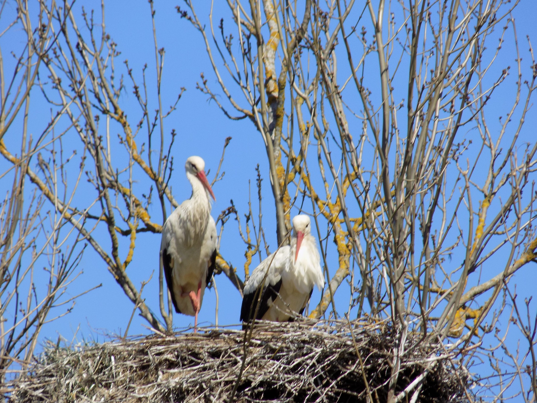 Storks by uzkuraitiene62