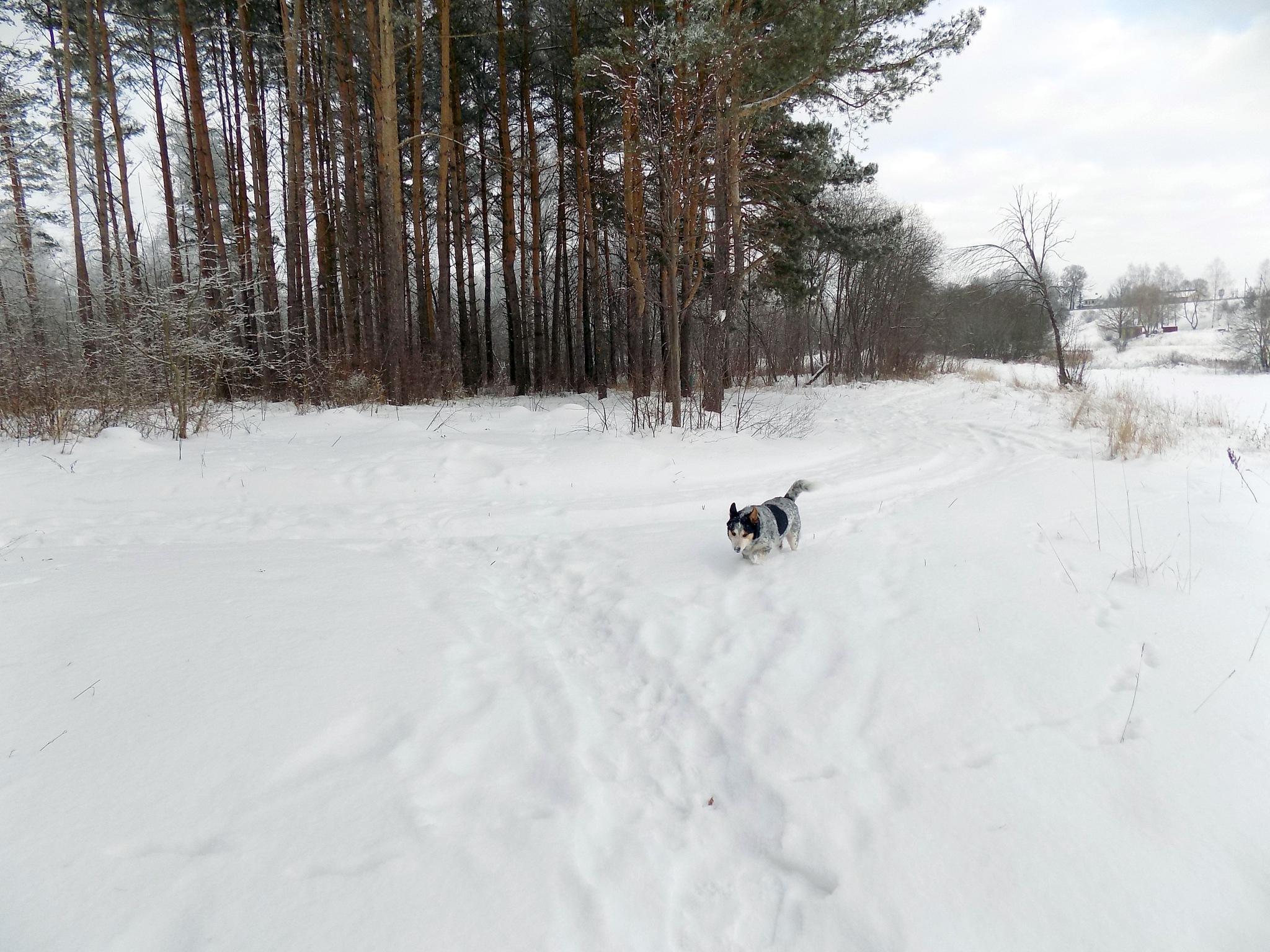 It was winter by uzkuraitiene62