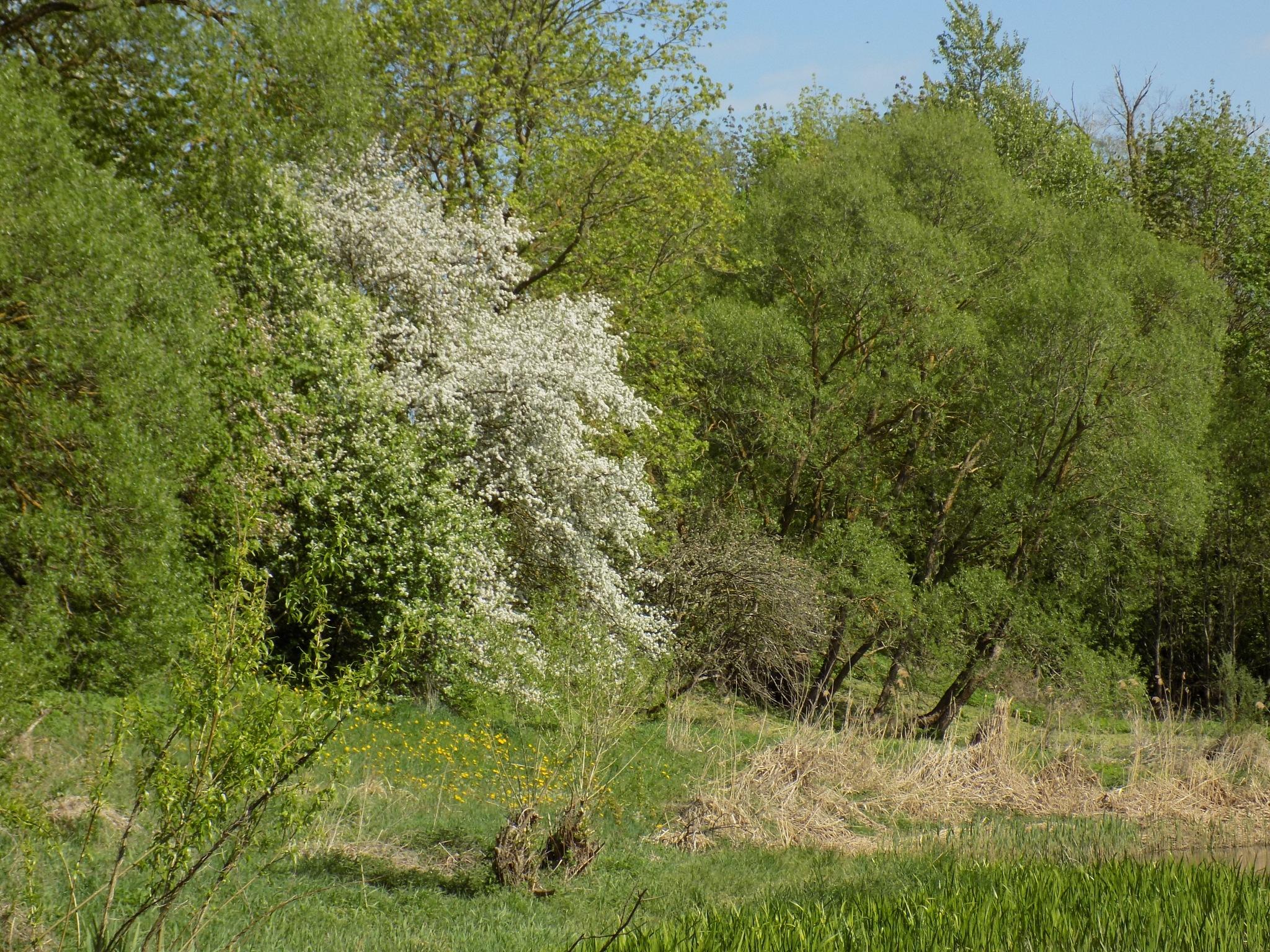 Nature in the spring by uzkuraitiene62
