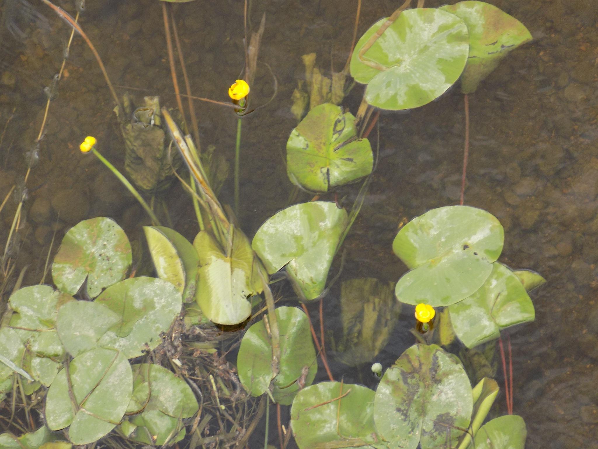 Water plants. by uzkuraitiene62