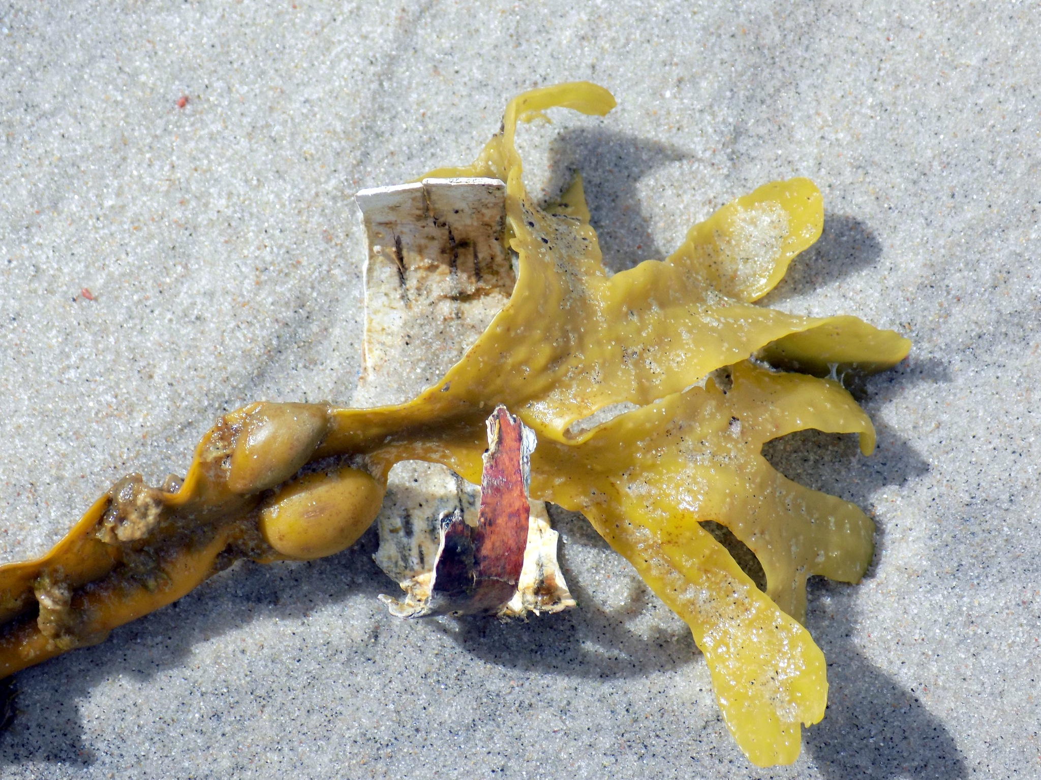On the seaside sand by uzkuraitiene62