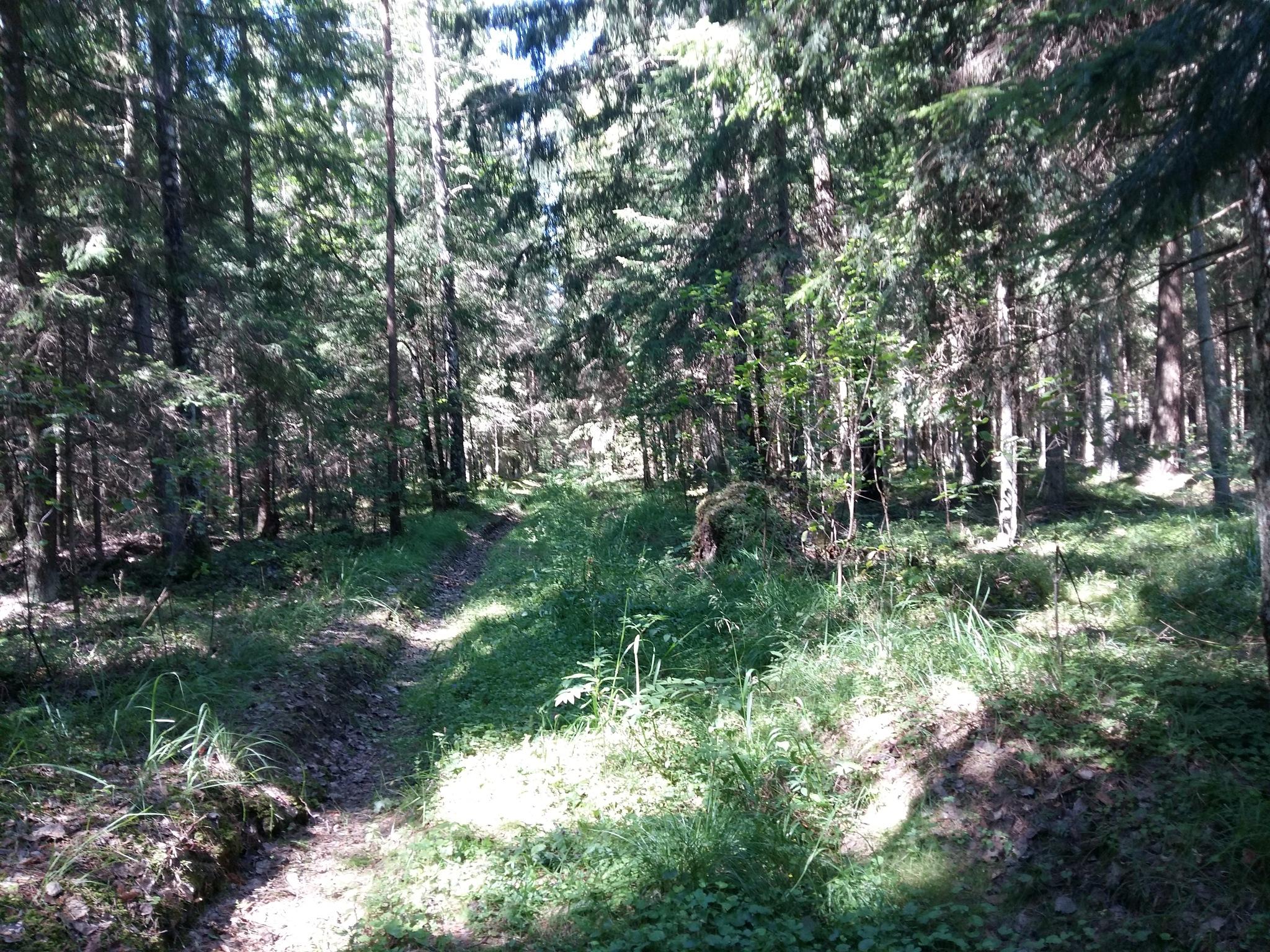 The trail im the forest by uzkuraitiene62