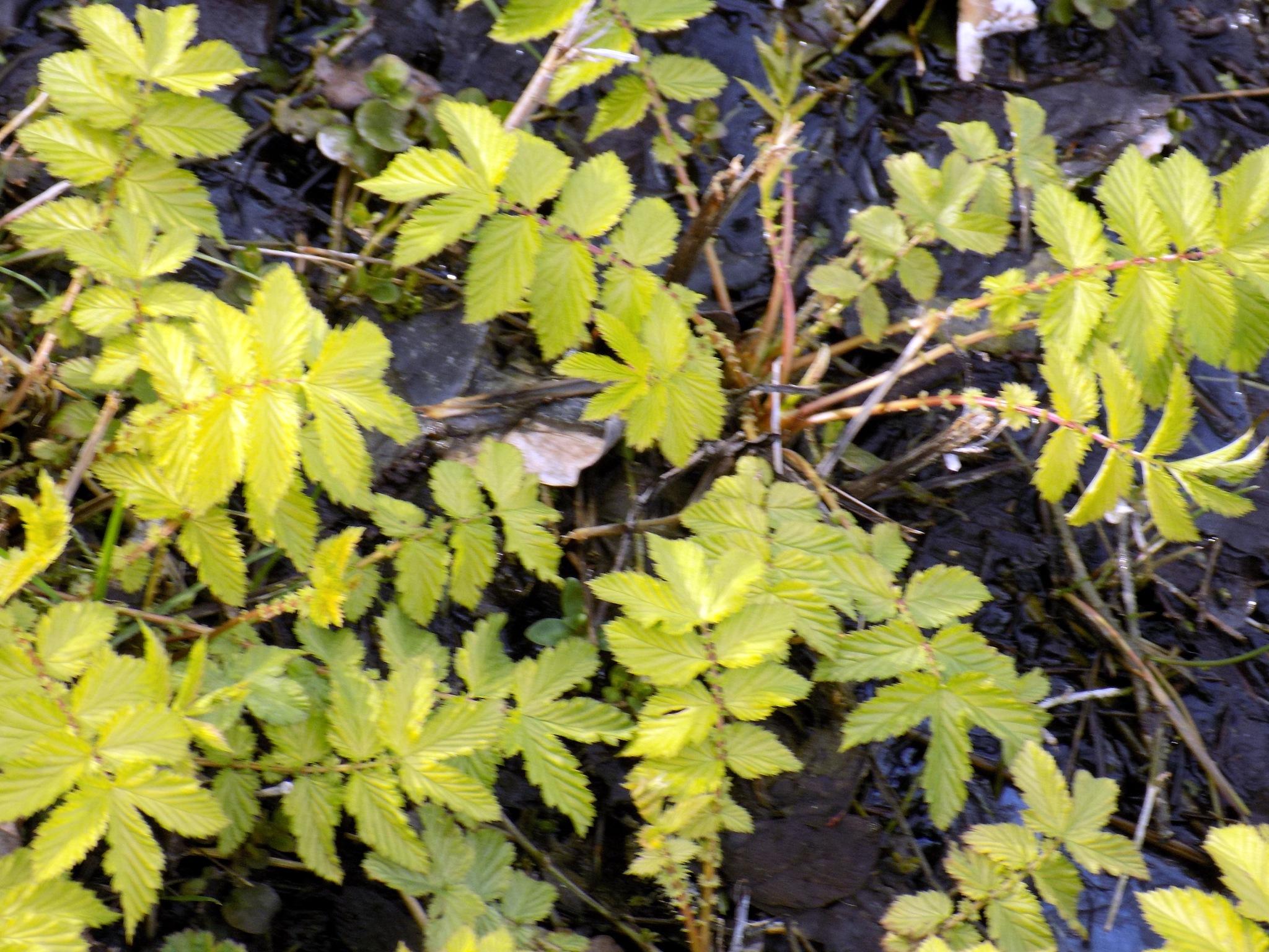 In the swamp by uzkuraitiene62