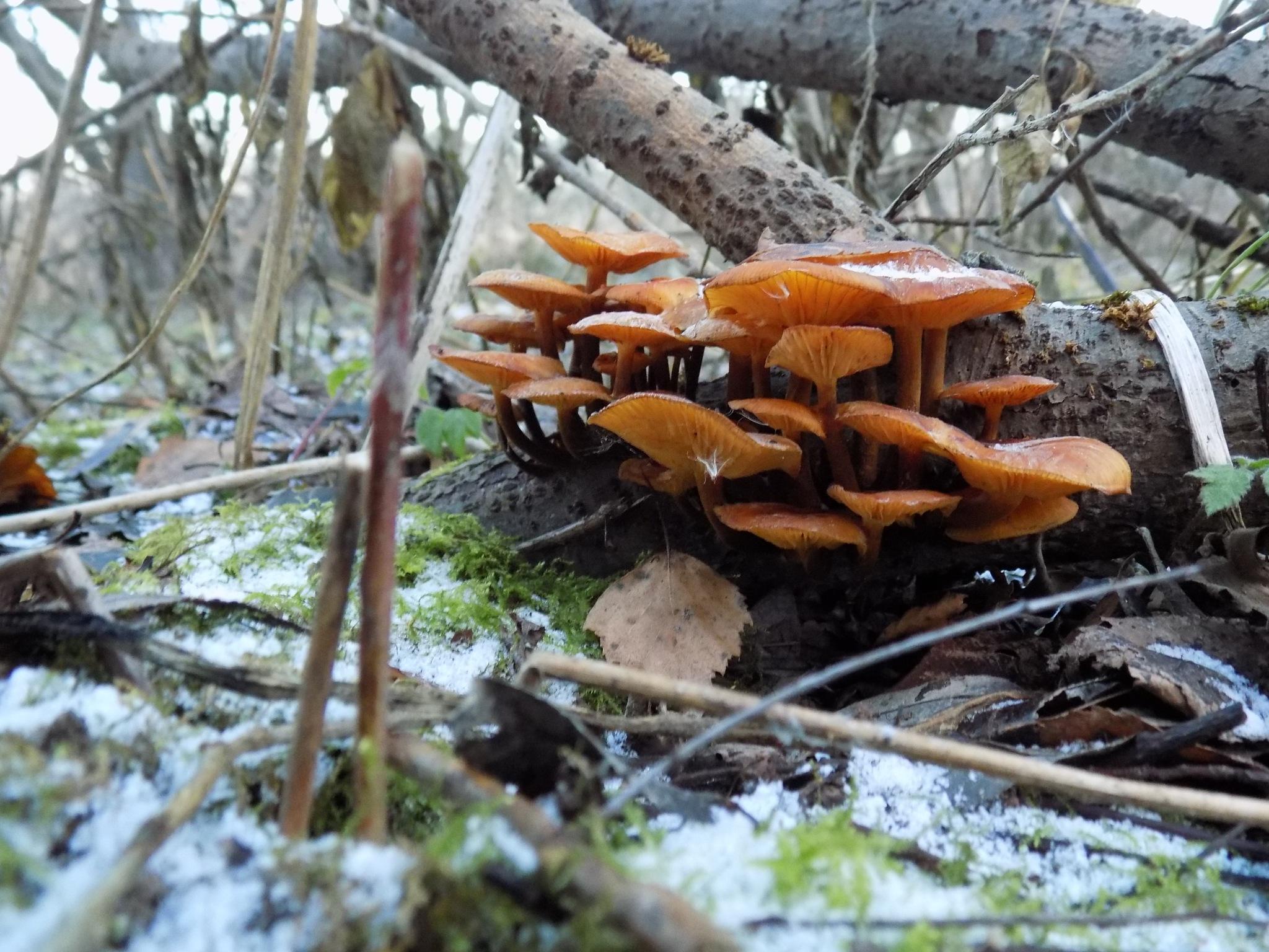 Mushrooms by uzkuraitiene62