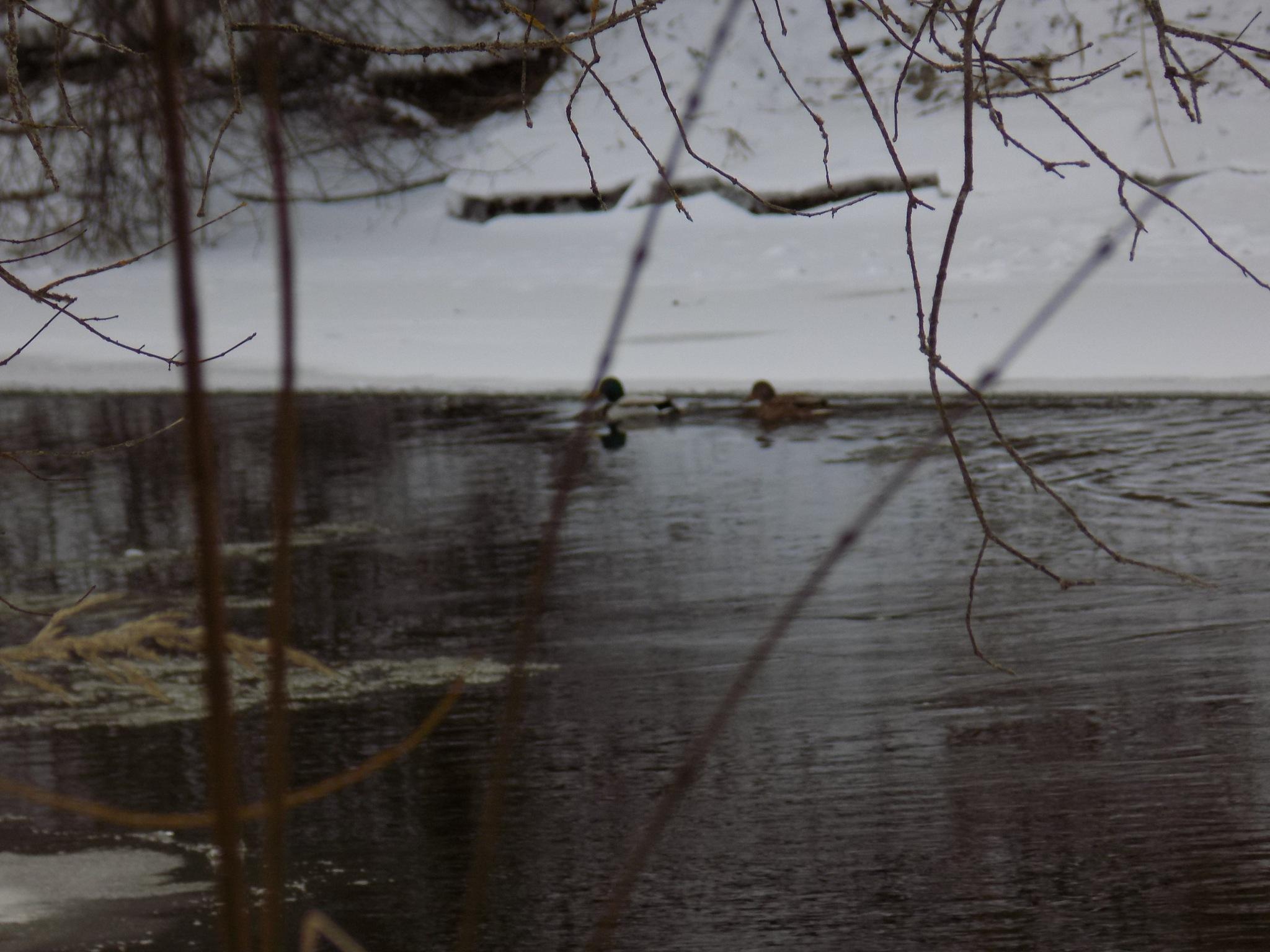 Gray winter day by uzkuraitiene62