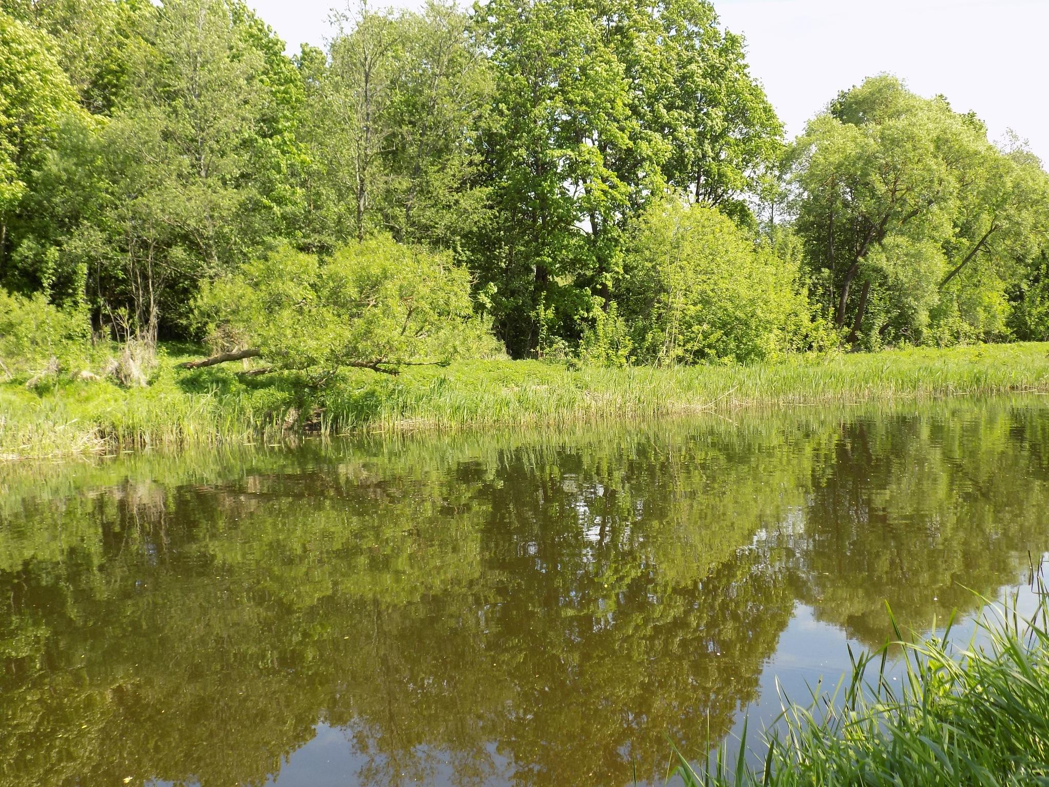 Green summer by uzkuraitiene62