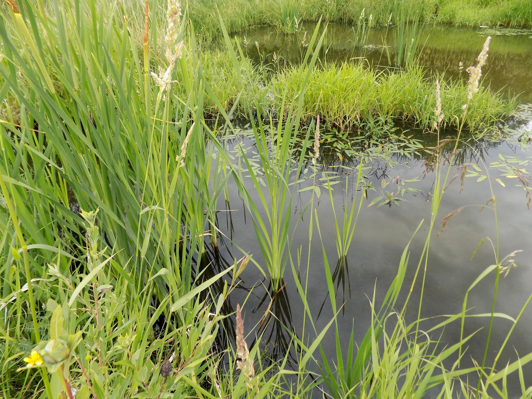 The marsh by uzkuraitiene62
