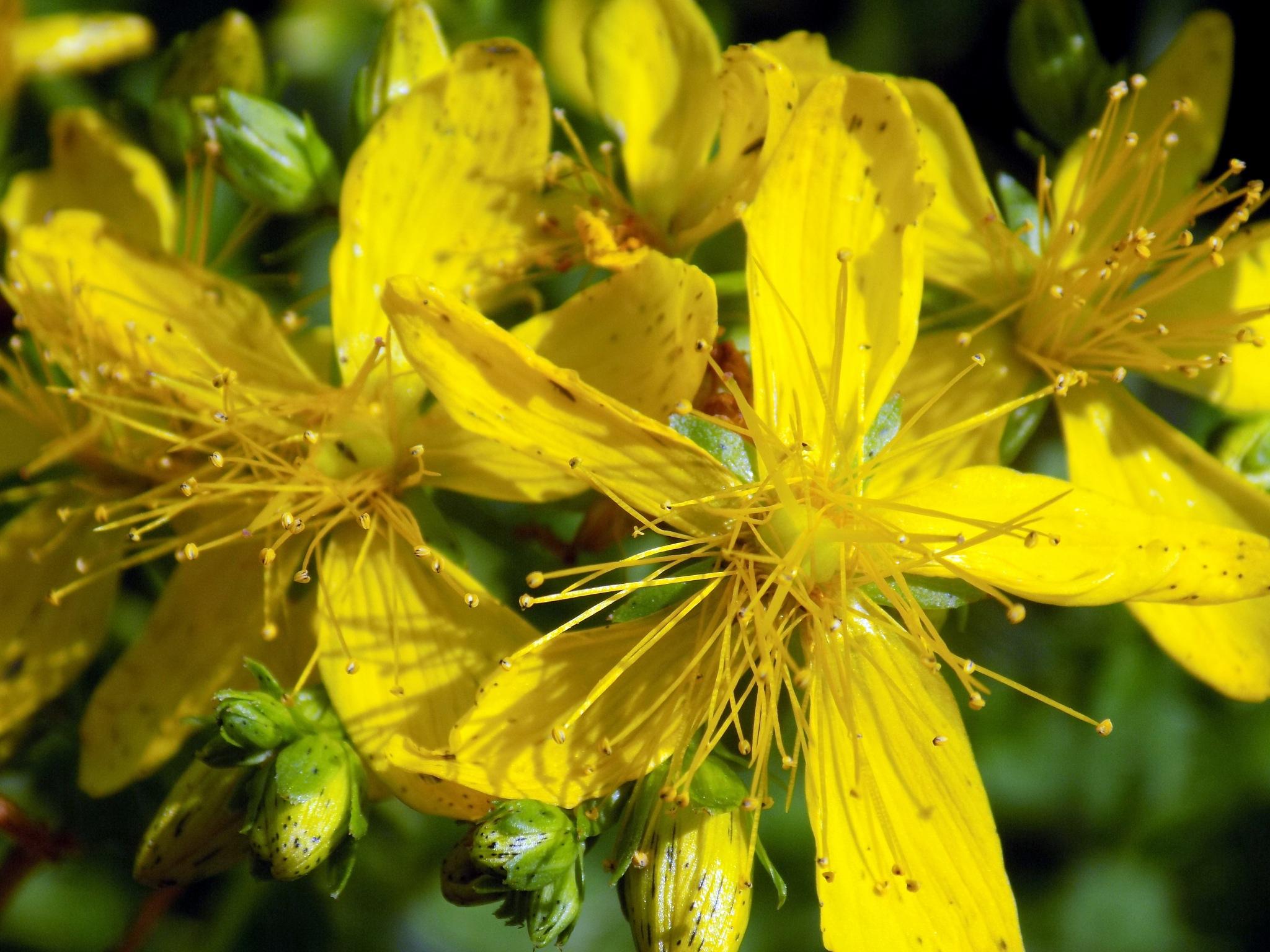 Yellow by uzkuraitiene62