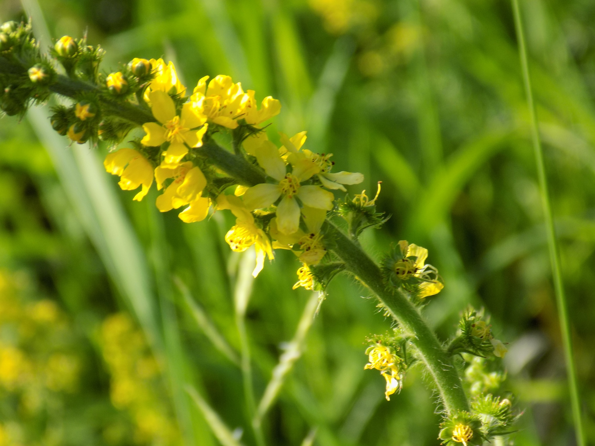 Green flowers by uzkuraitiene62