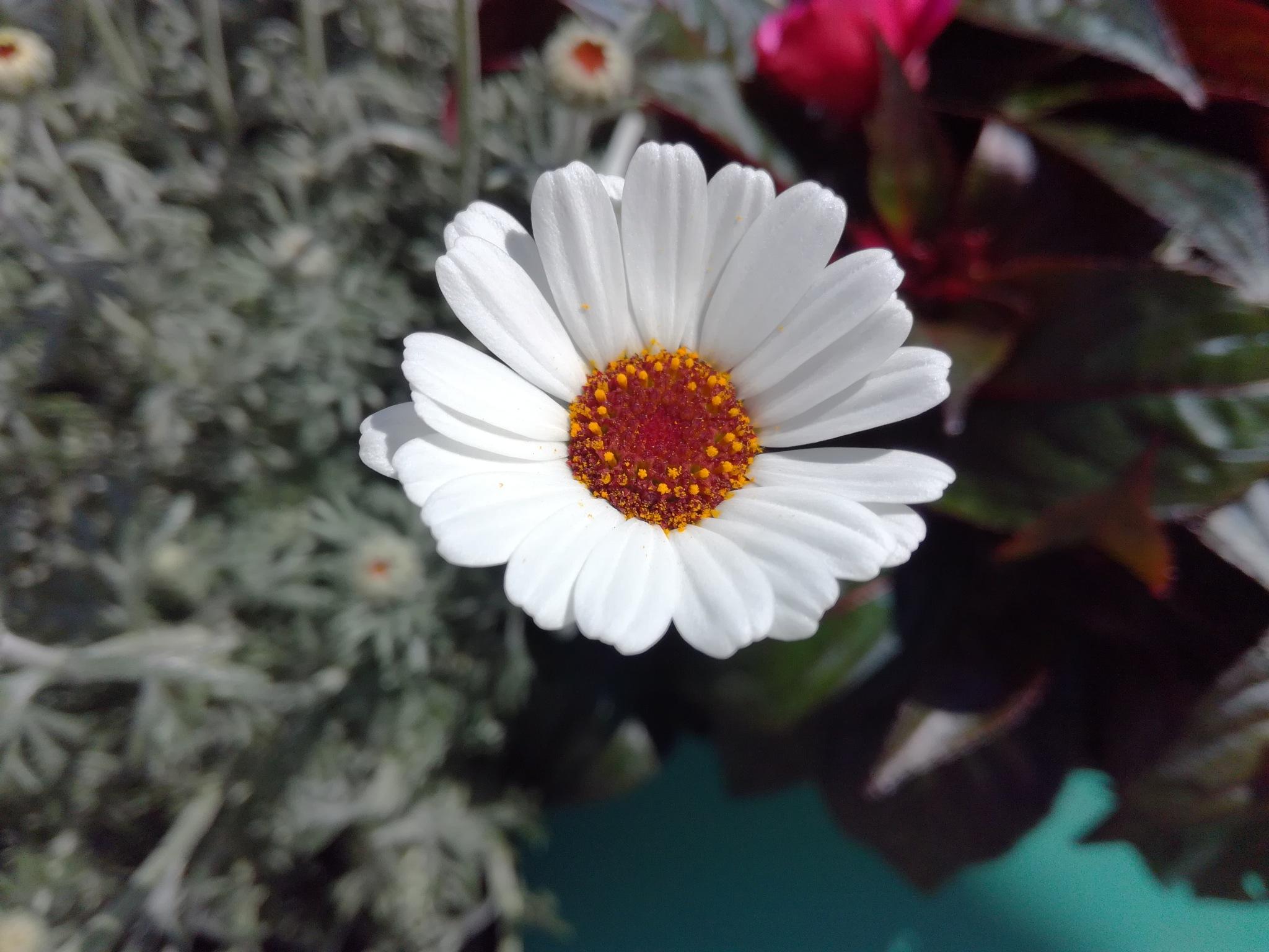 One flower by uzkuraitiene62