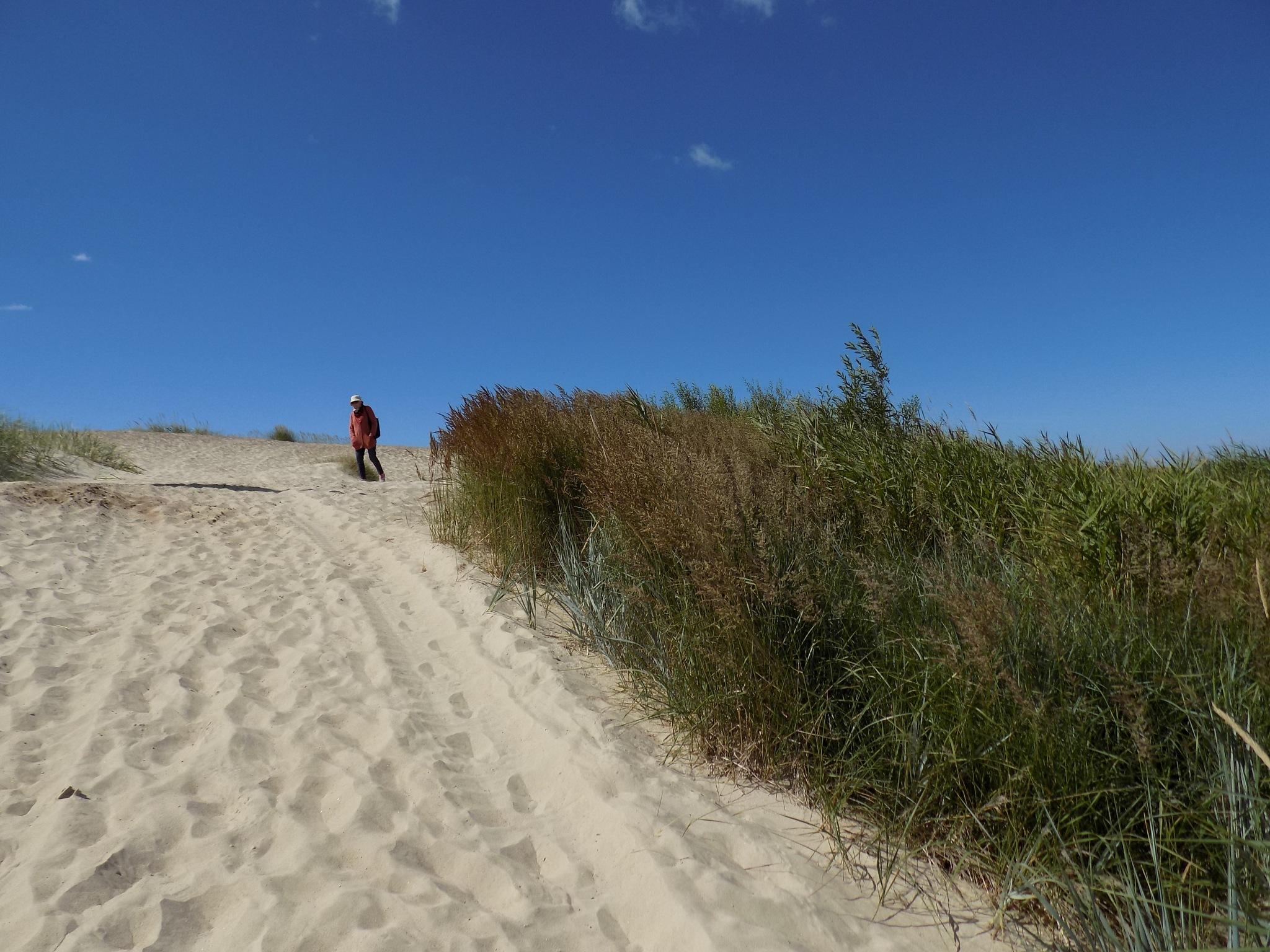 Dunes by uzkuraitiene62