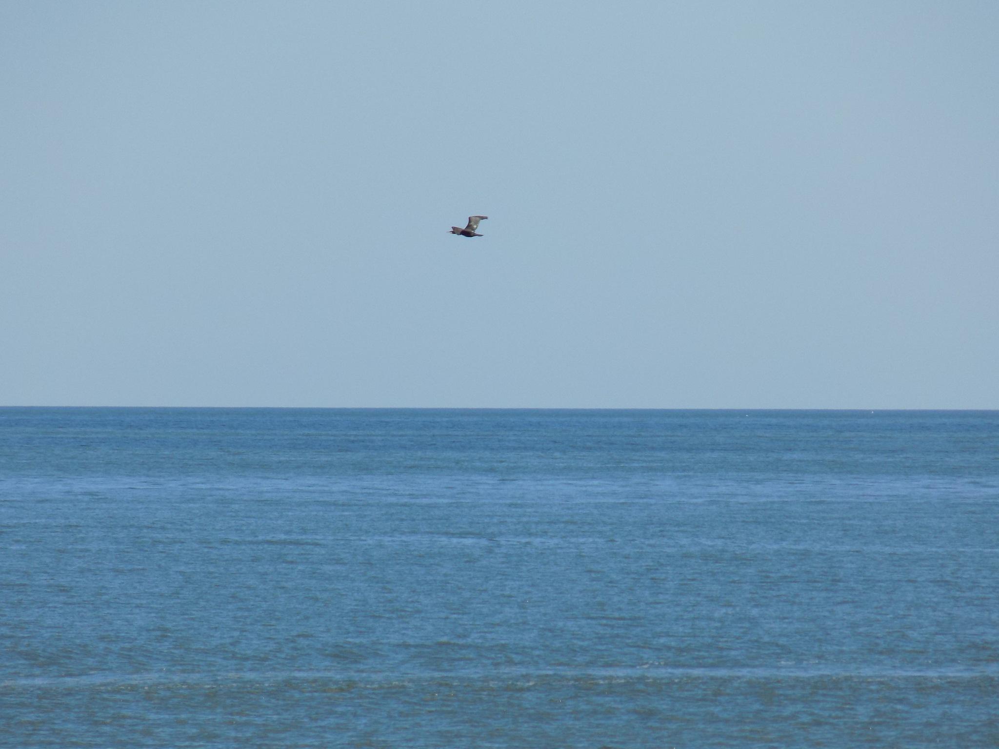 Bird over the sea by uzkuraitiene62