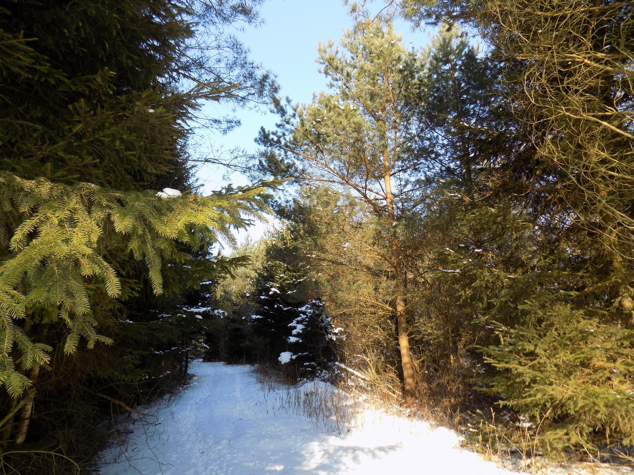 Path in the forest by uzkuraitiene62