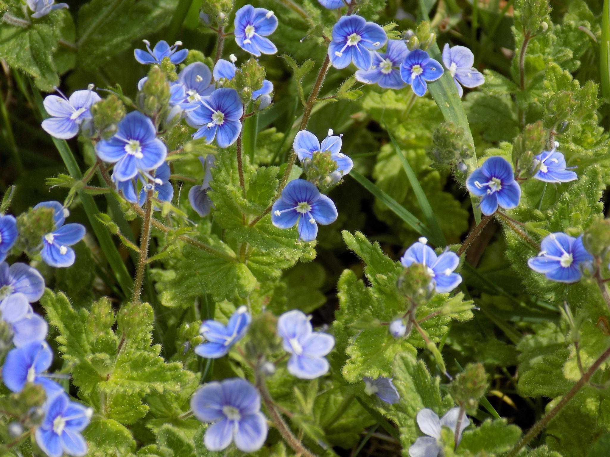 Wild flowers by uzkuraitiene62