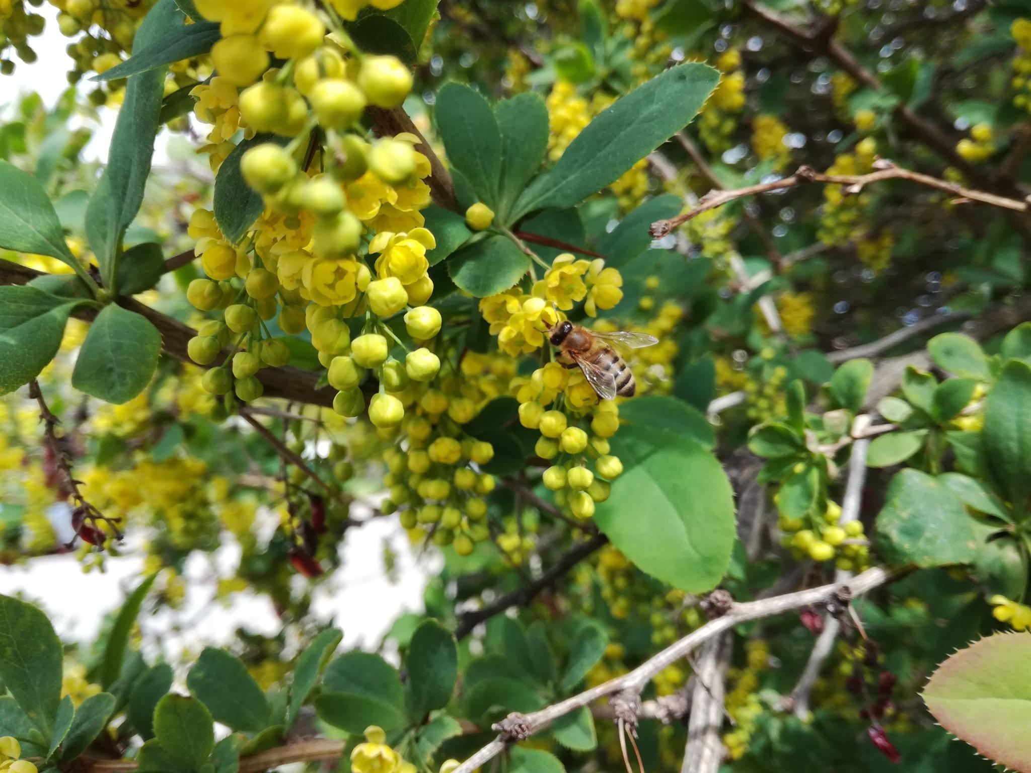Flowers and bee by uzkuraitiene62