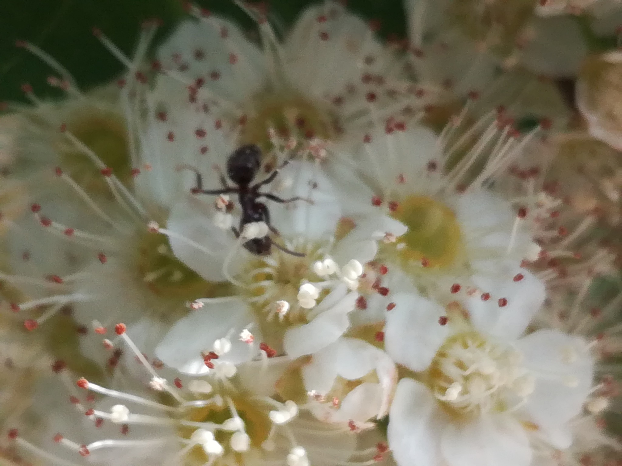 Flower with ants by uzkuraitiene62