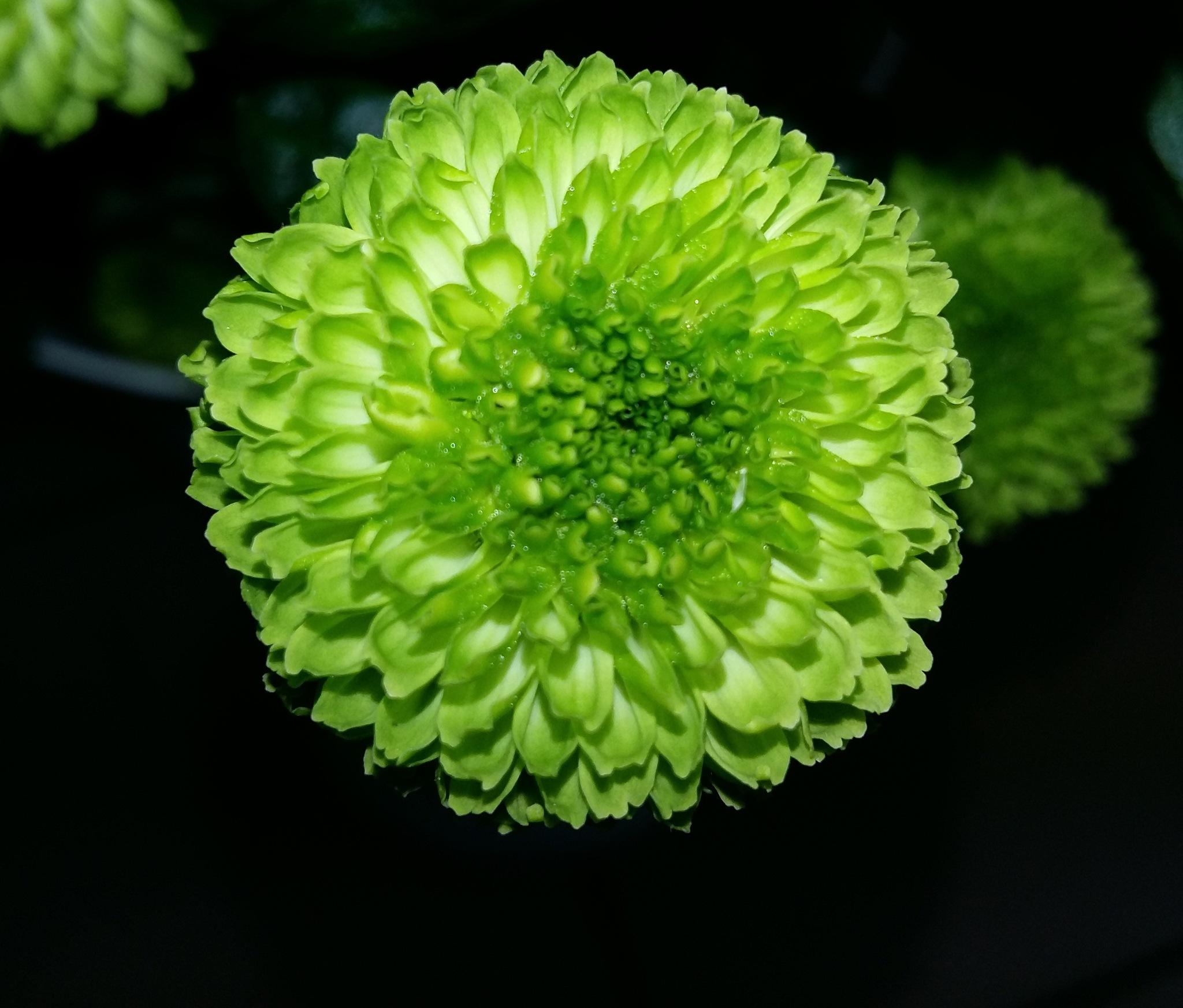 Green flower by uzkuraitiene62
