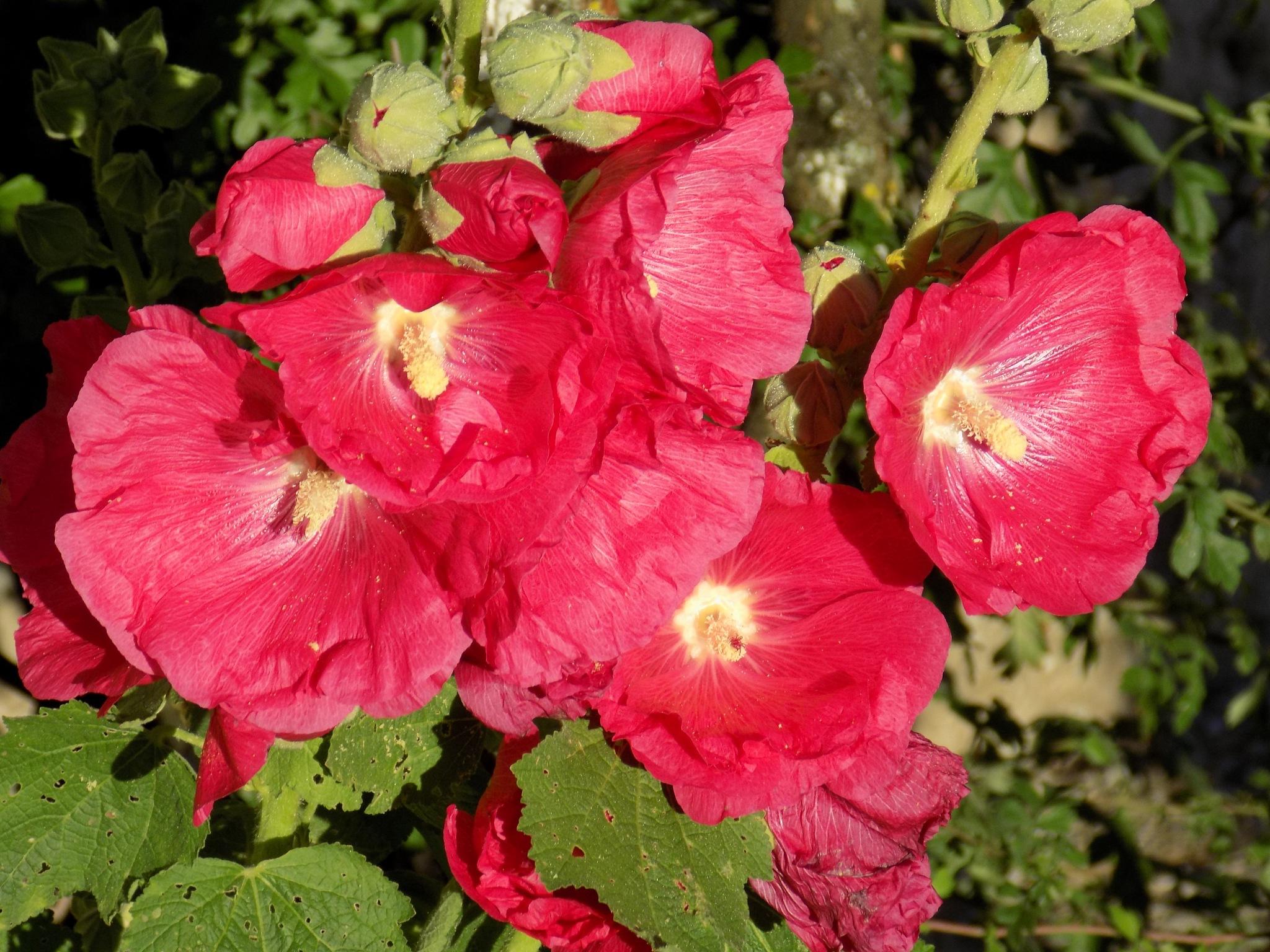 Red flowers by uzkuraitiene62