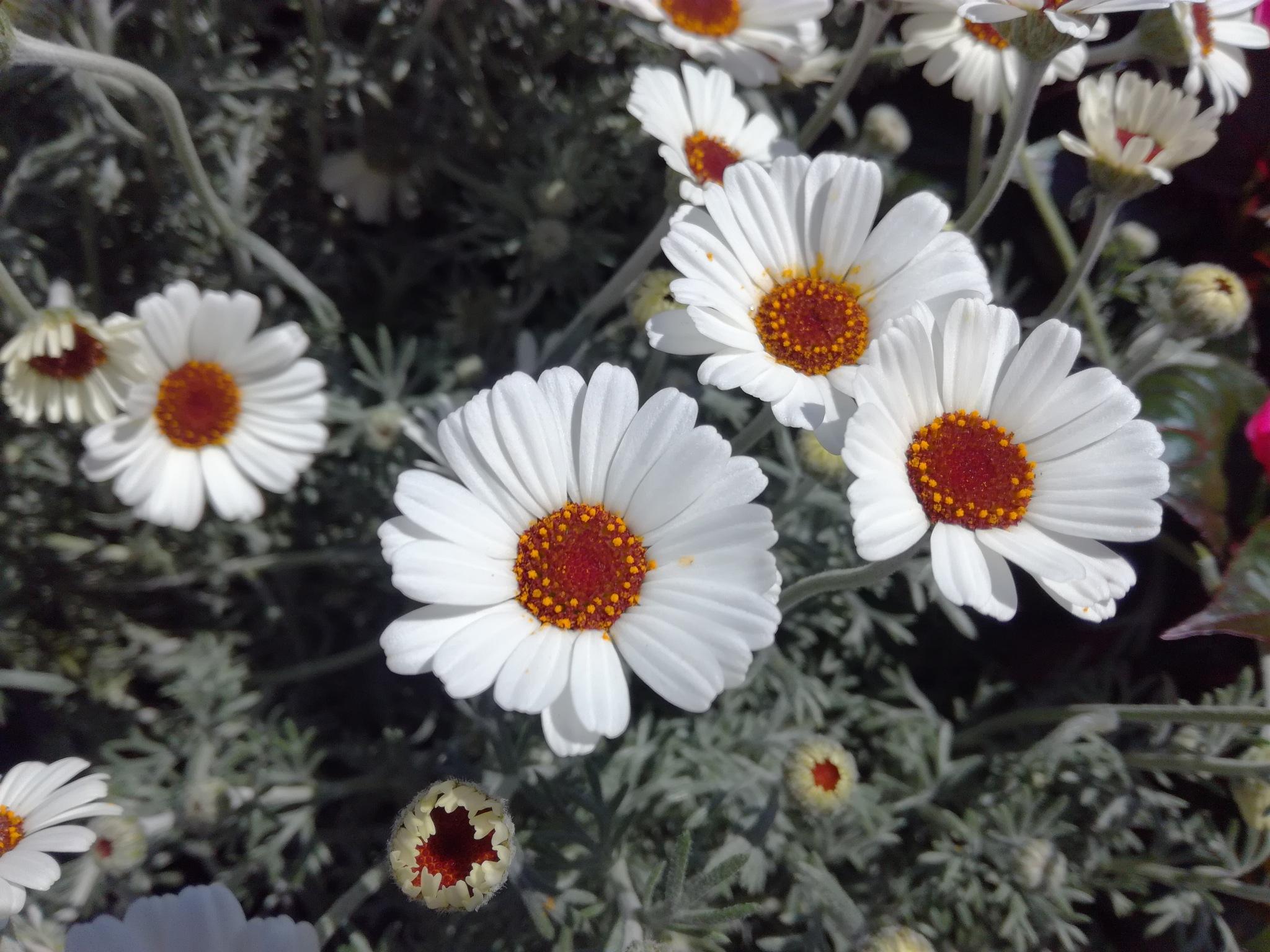 White flowers by uzkuraitiene62