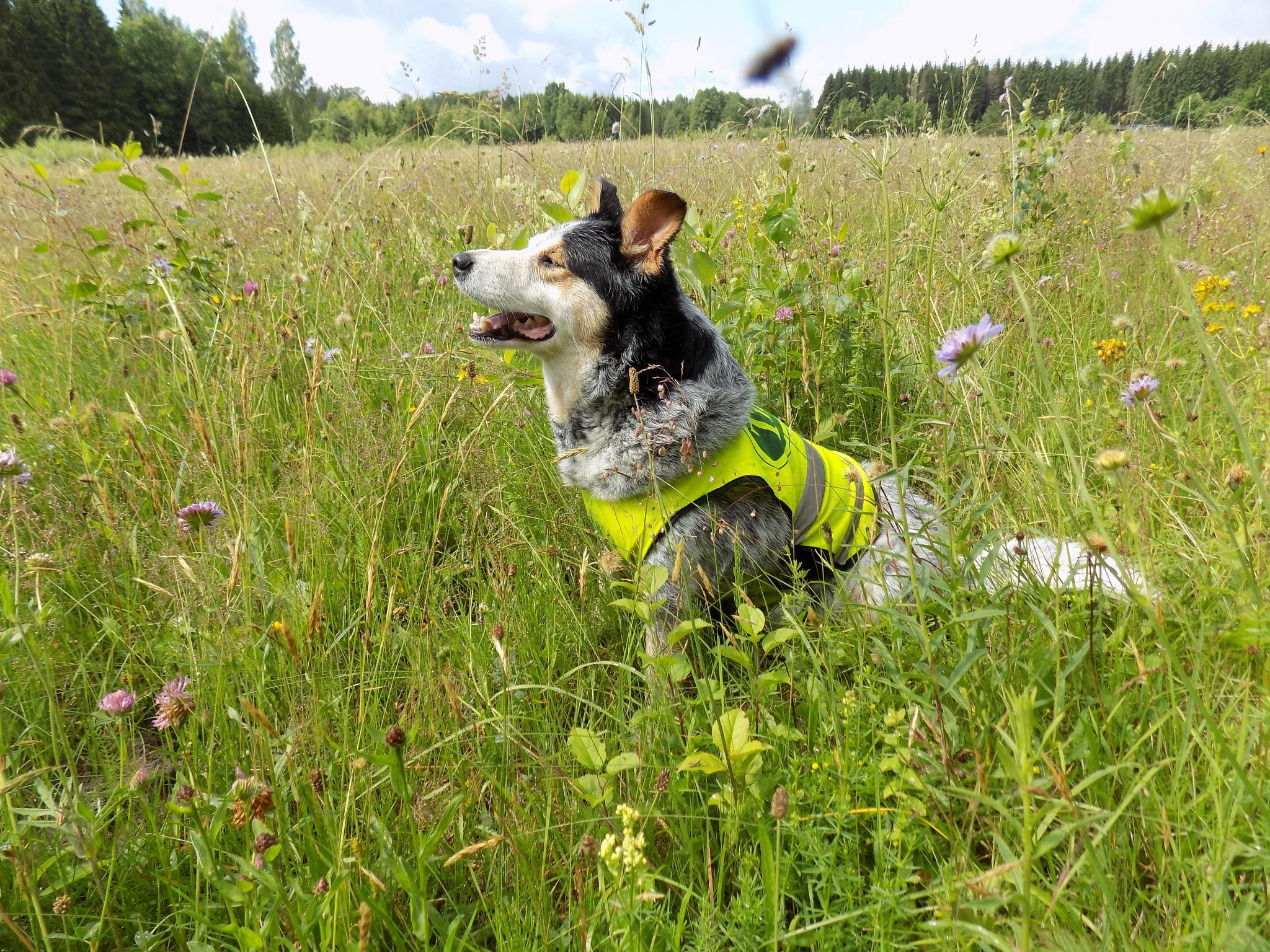 My pet in the meadow by uzkuraitiene62