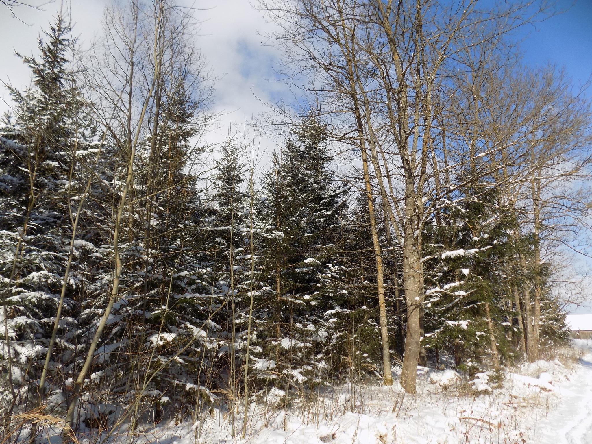 Nature in the winter by uzkuraitiene62