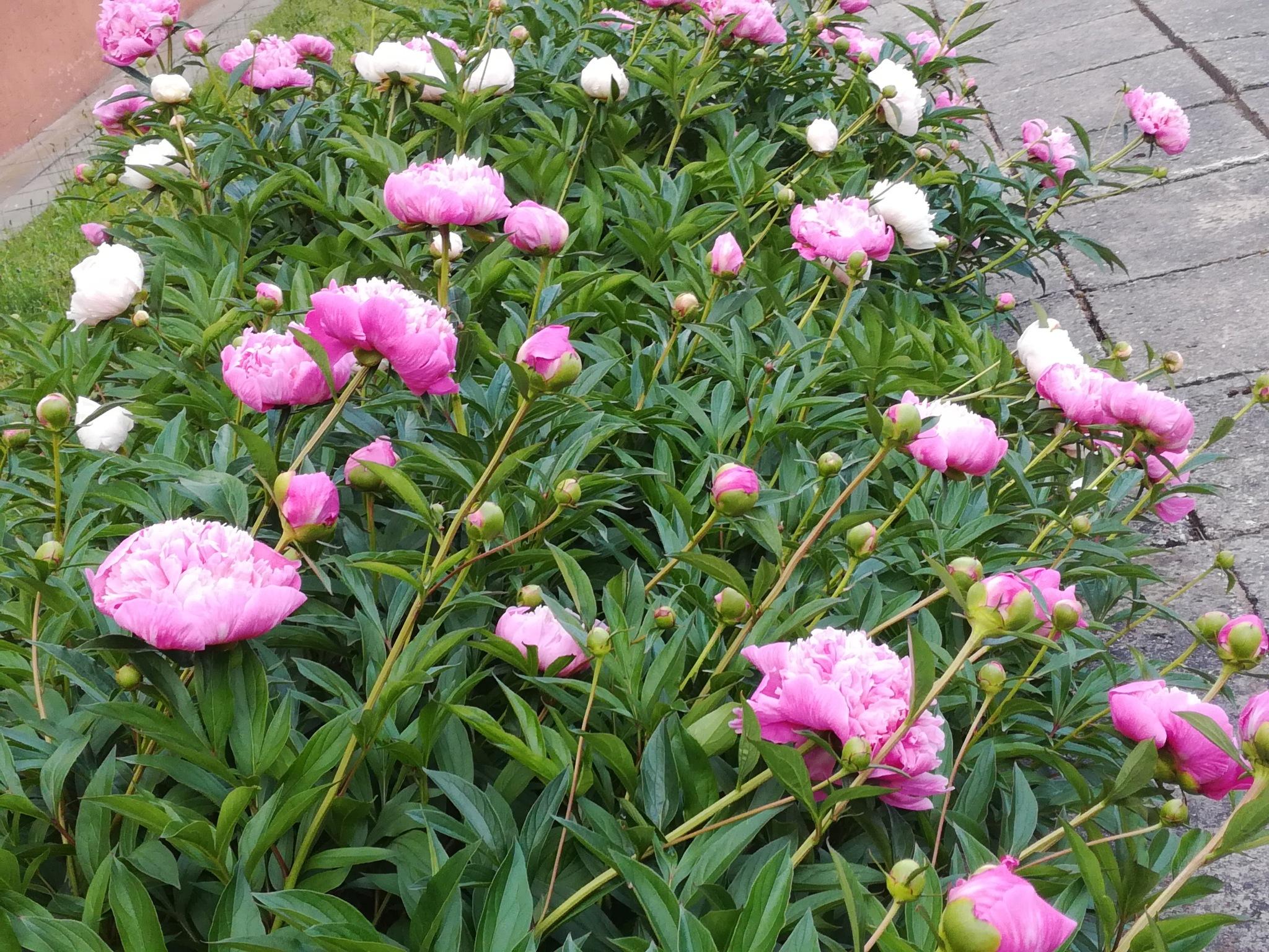 It was in spring by uzkuraitiene62
