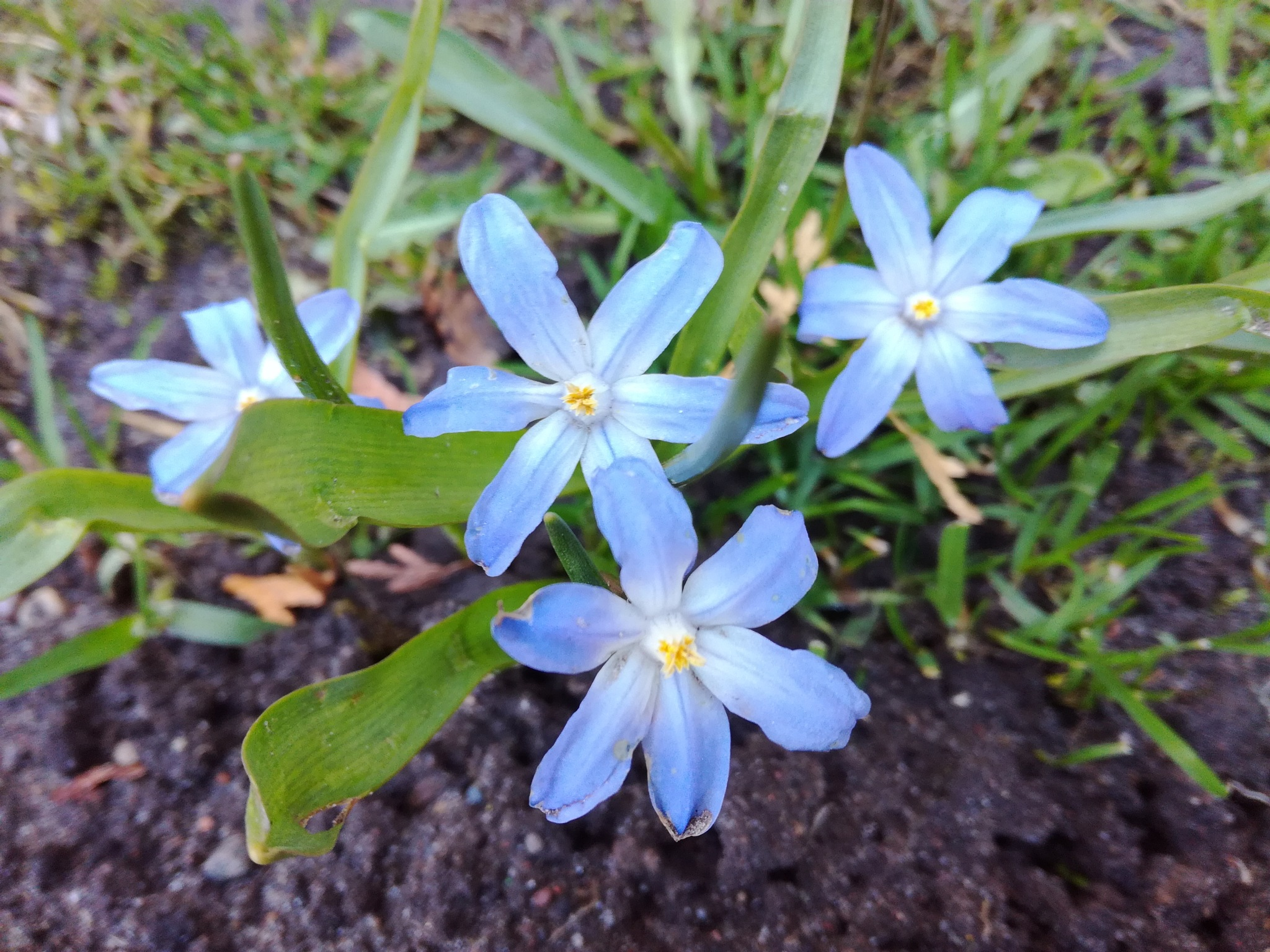 Blue flowers by uzkuraitiene62