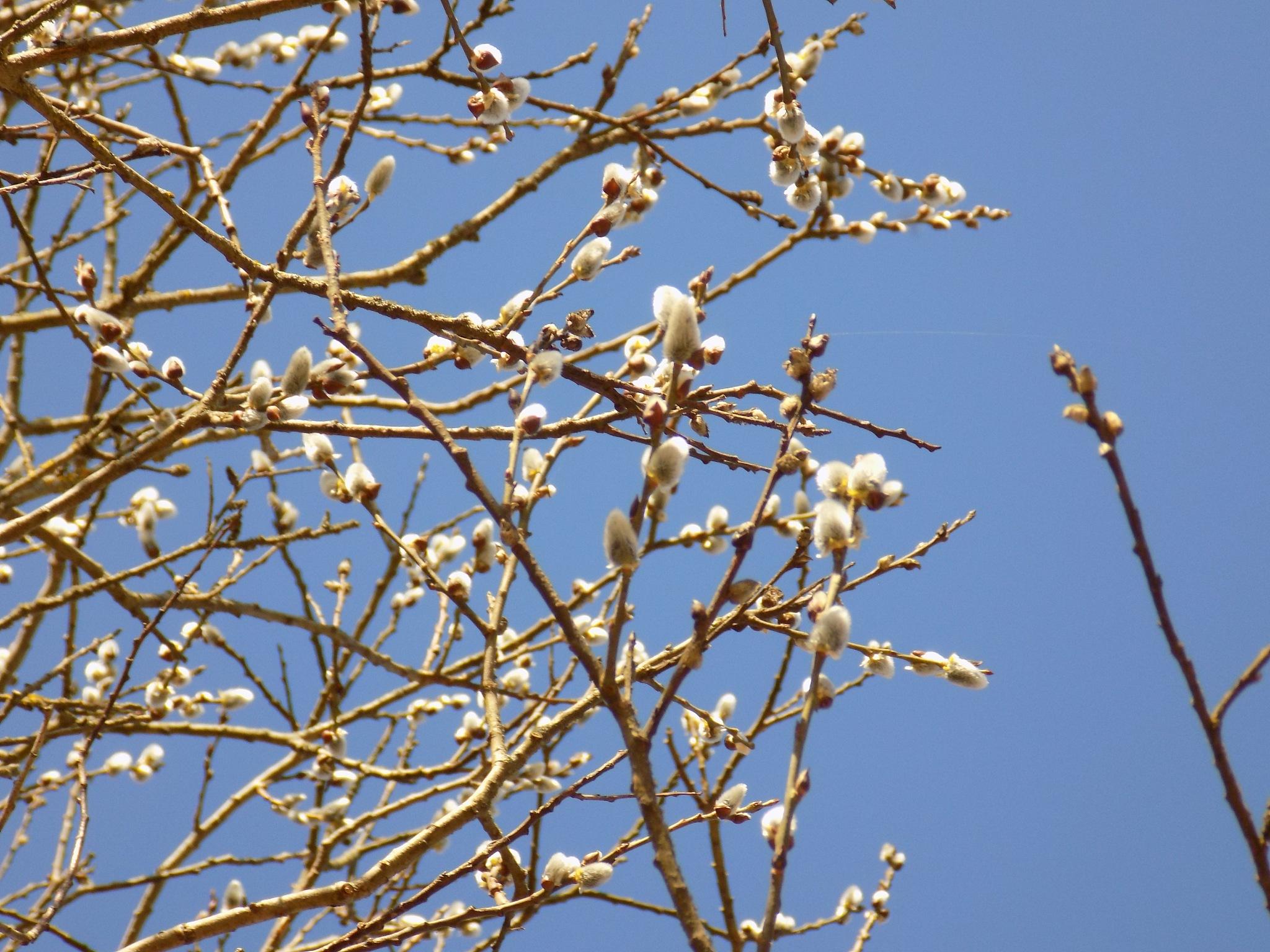Ivy in the spring by uzkuraitiene62