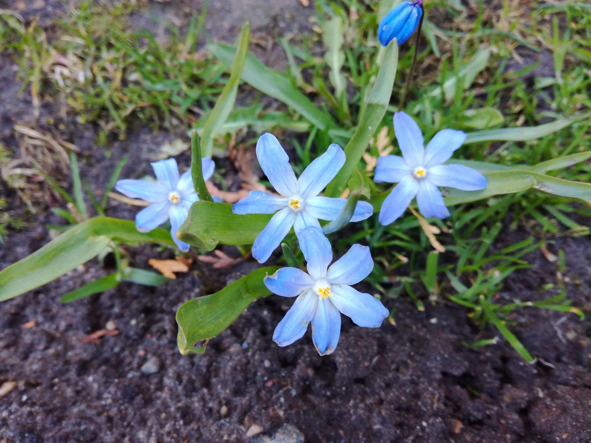 Spring flowers by uzkuraitiene62