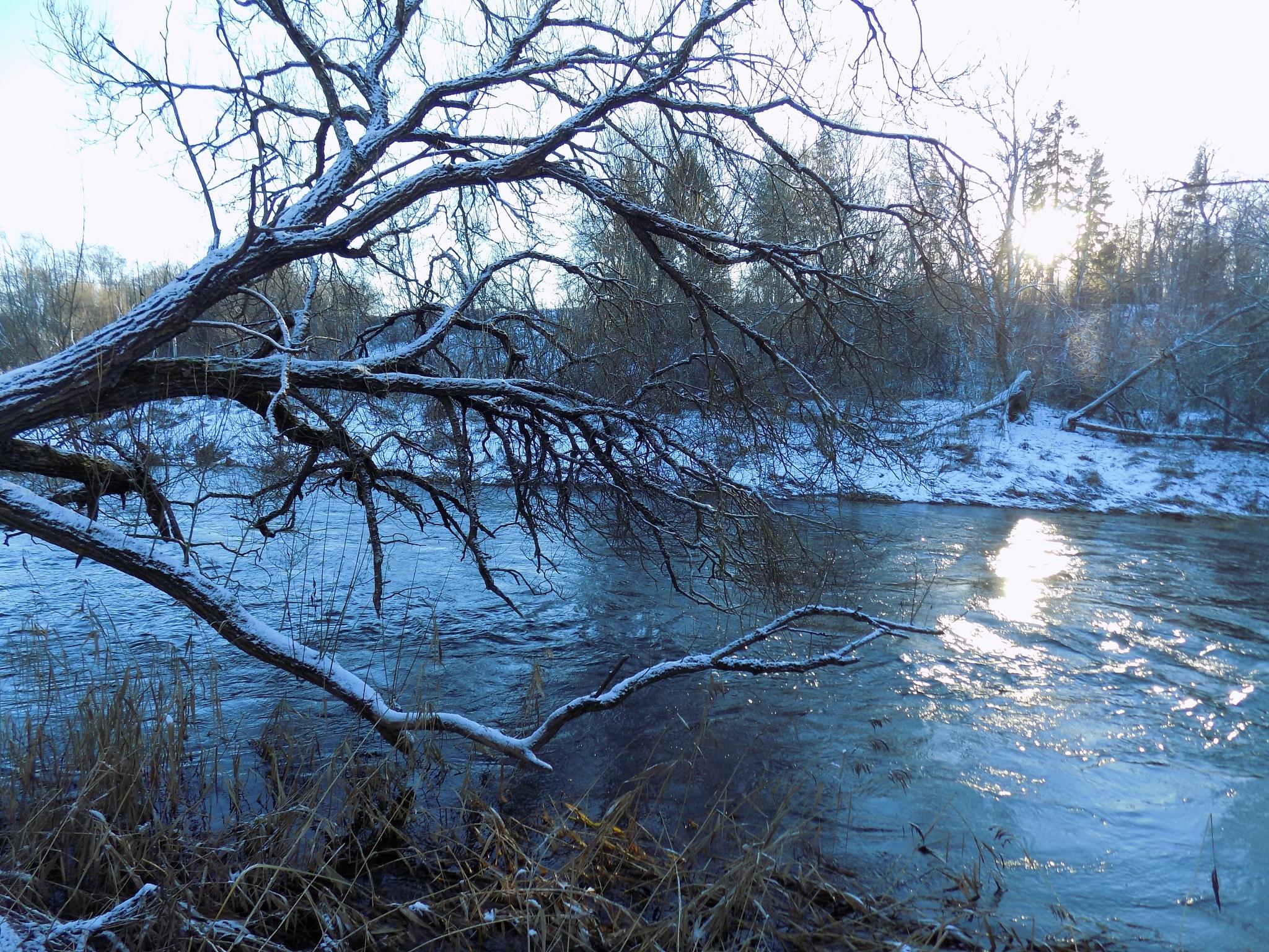 In winter by uzkuraitiene62