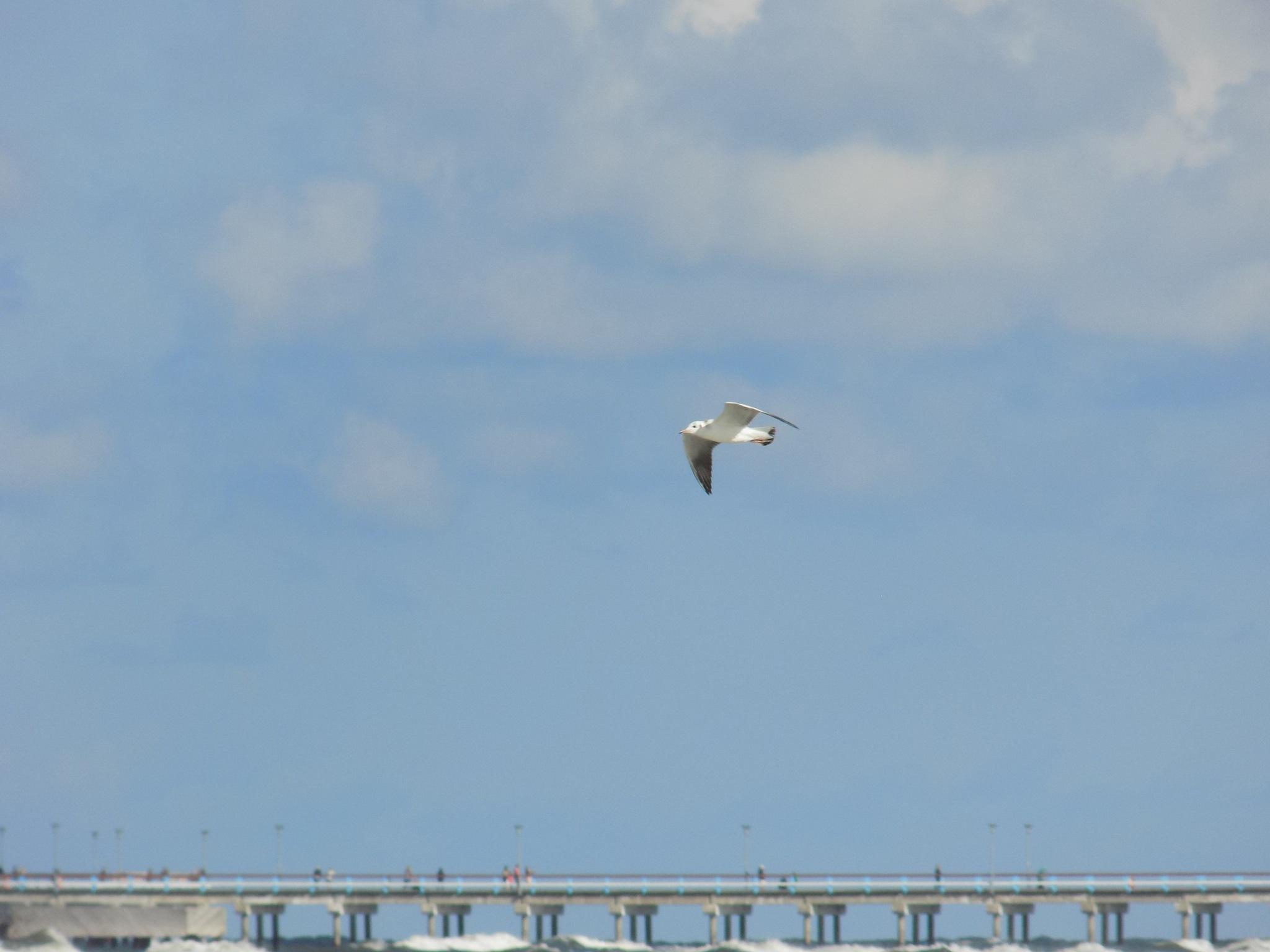Bird over sea by uzkuraitiene62
