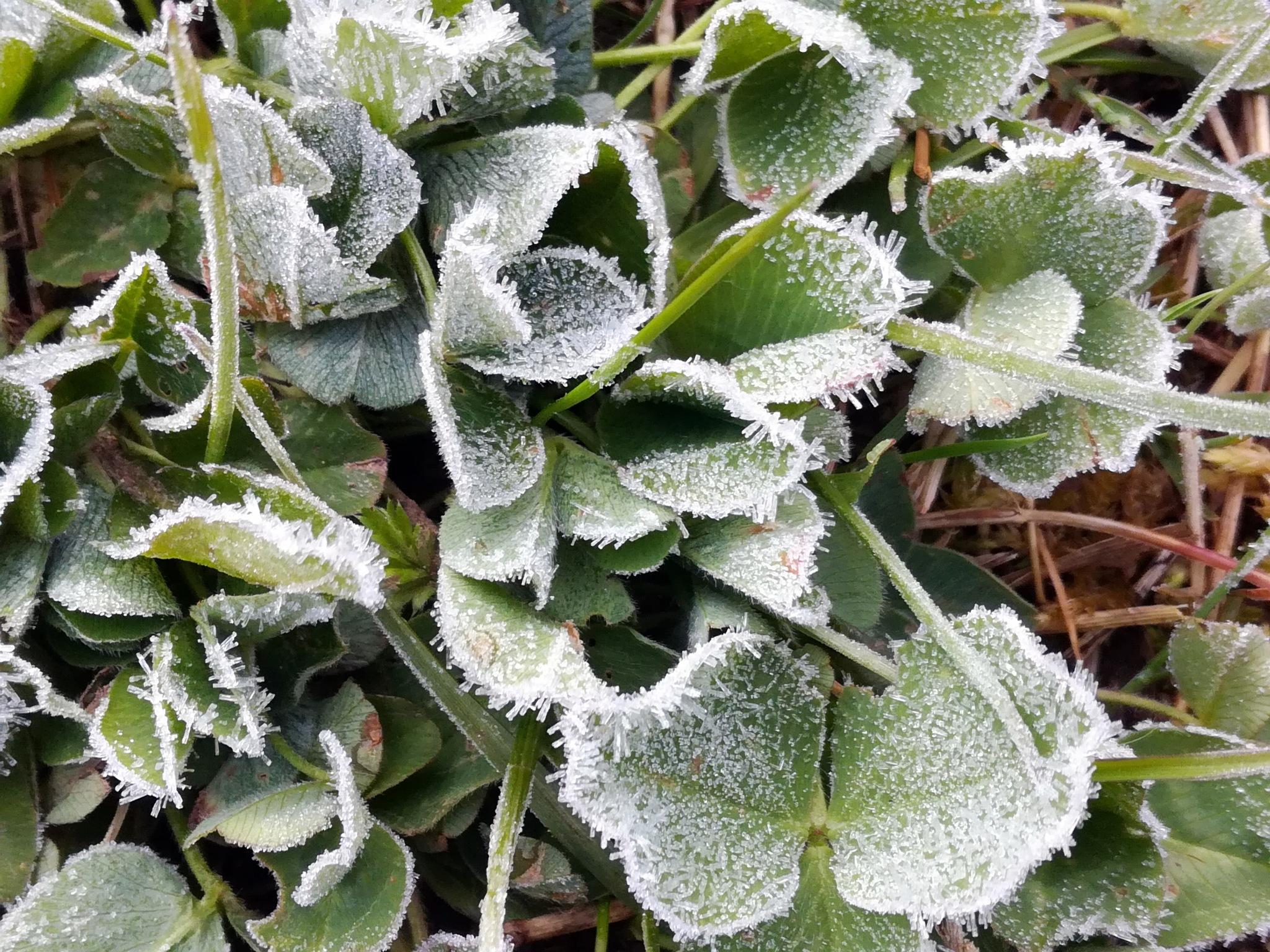 Frost by uzkuraitiene62