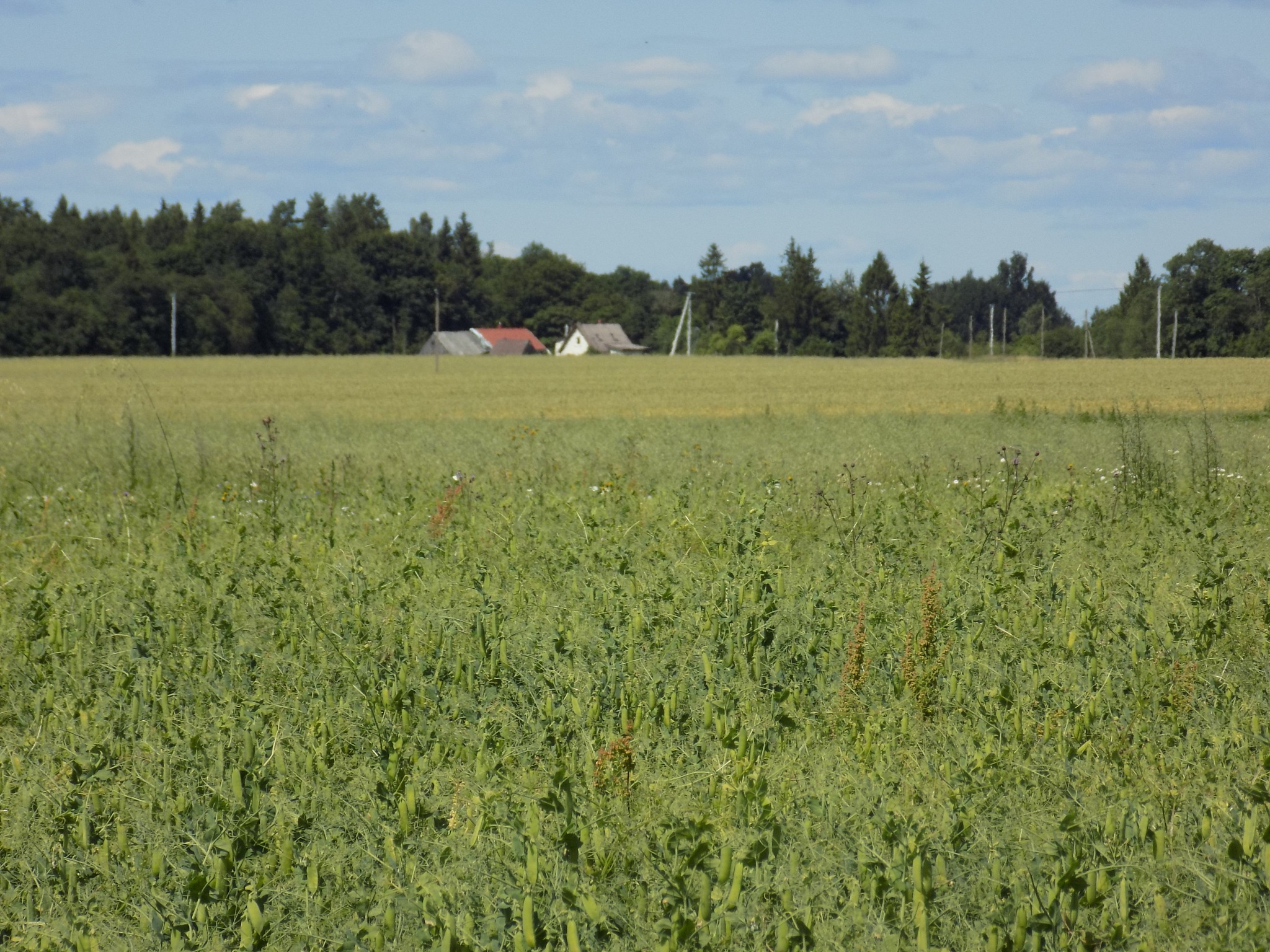 Green field by uzkuraitiene62