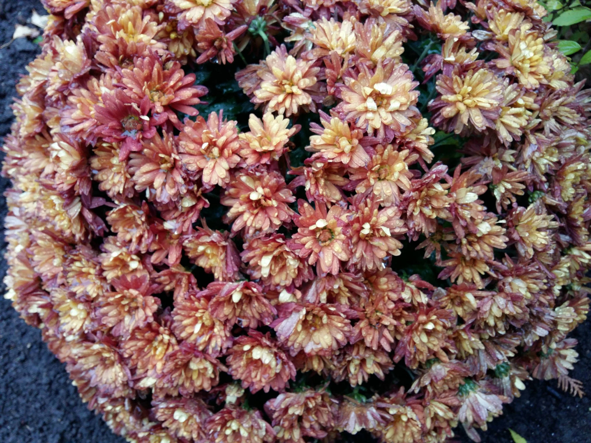Flowers after rain by uzkuraitiene62
