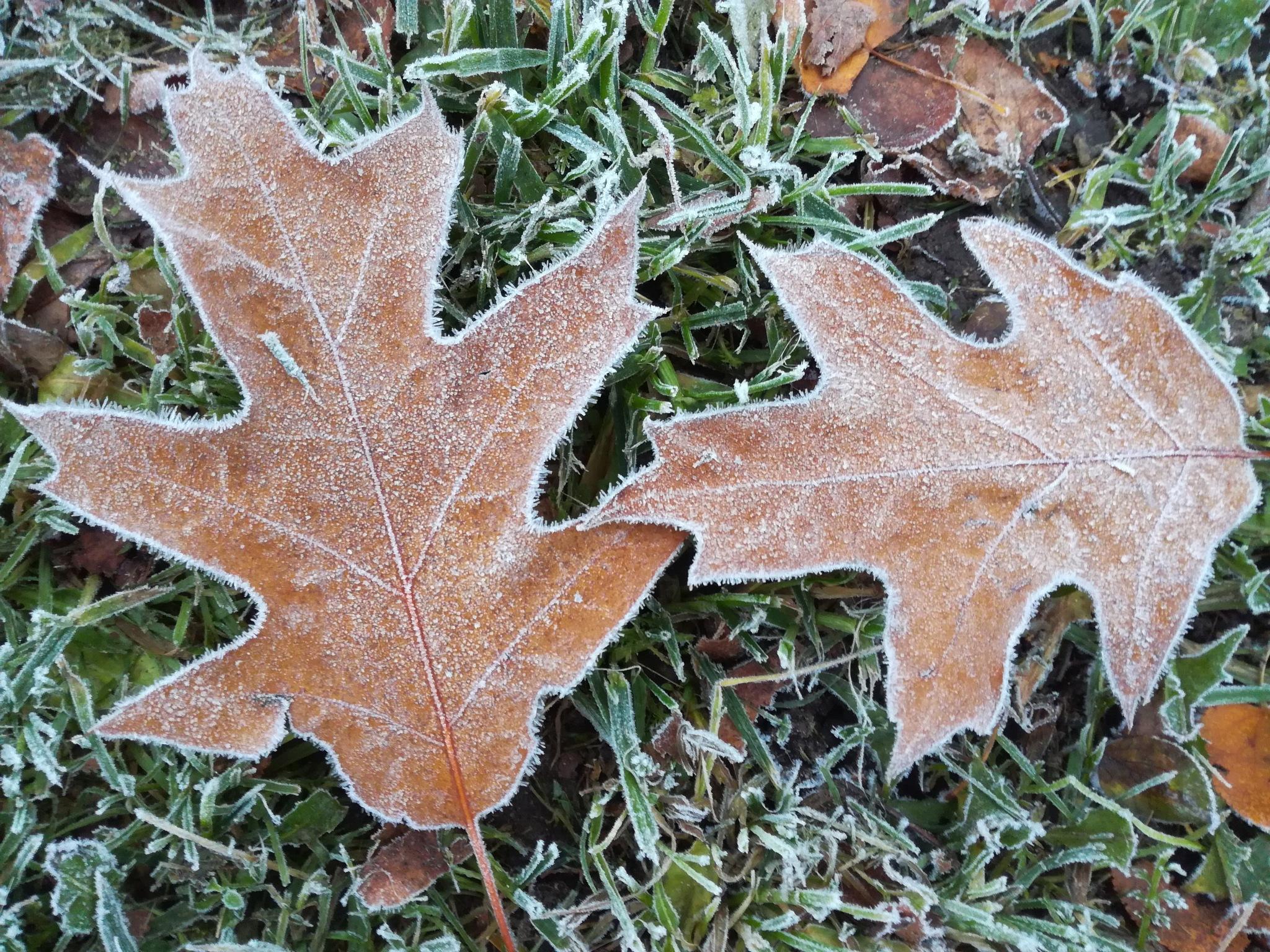 Dry leaves by uzkuraitiene62