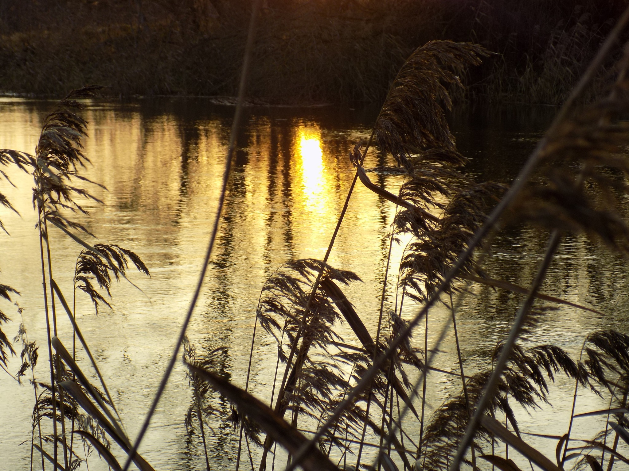 In evening by uzkuraitiene62