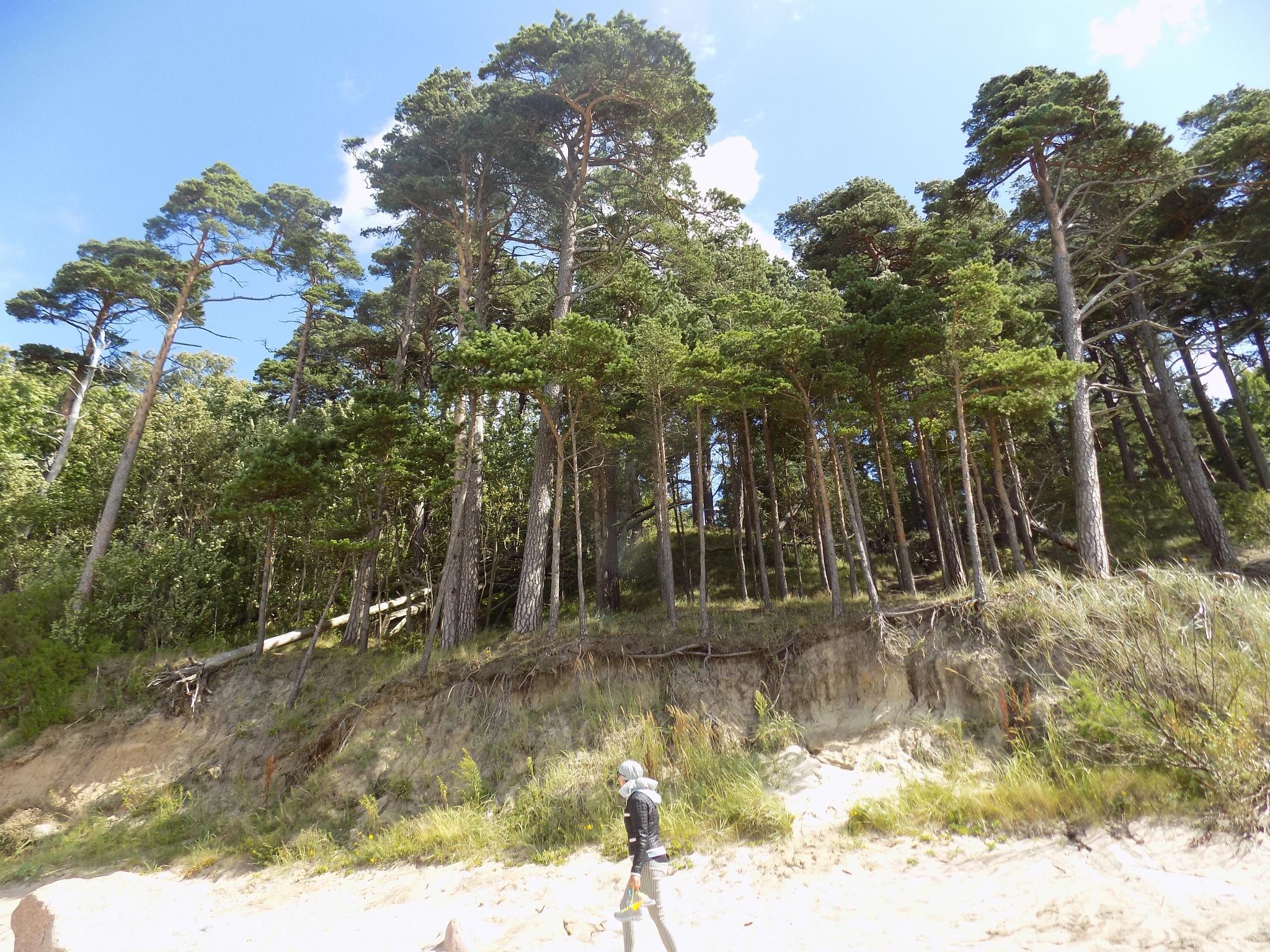 Seaside Forest by uzkuraitiene62