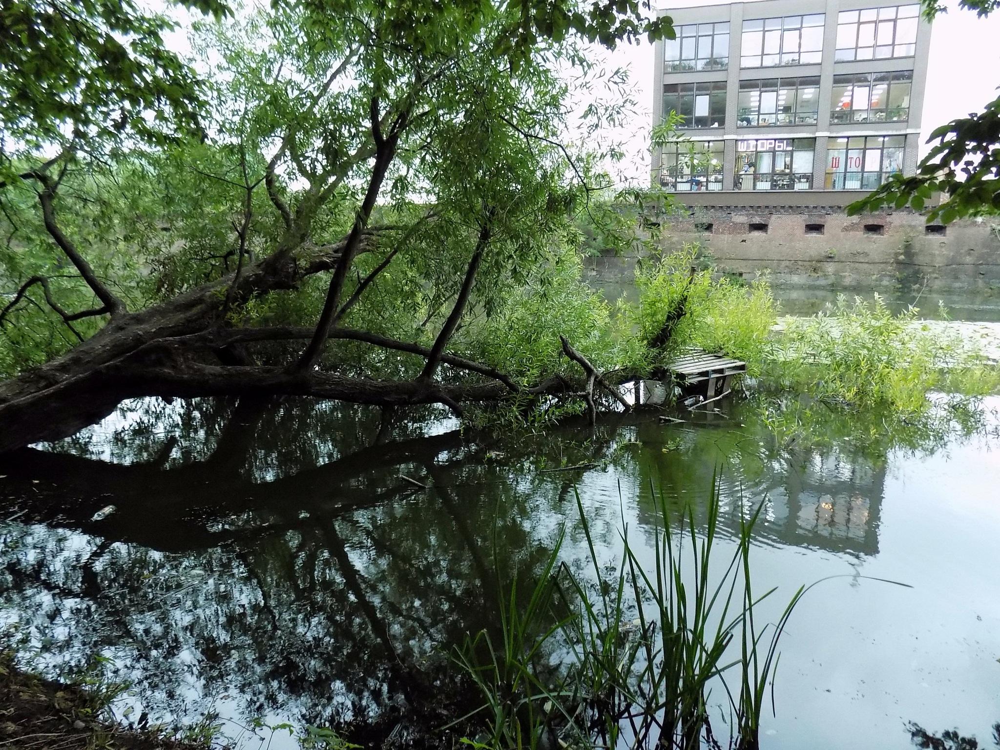 Reflections by uzkuraitiene62