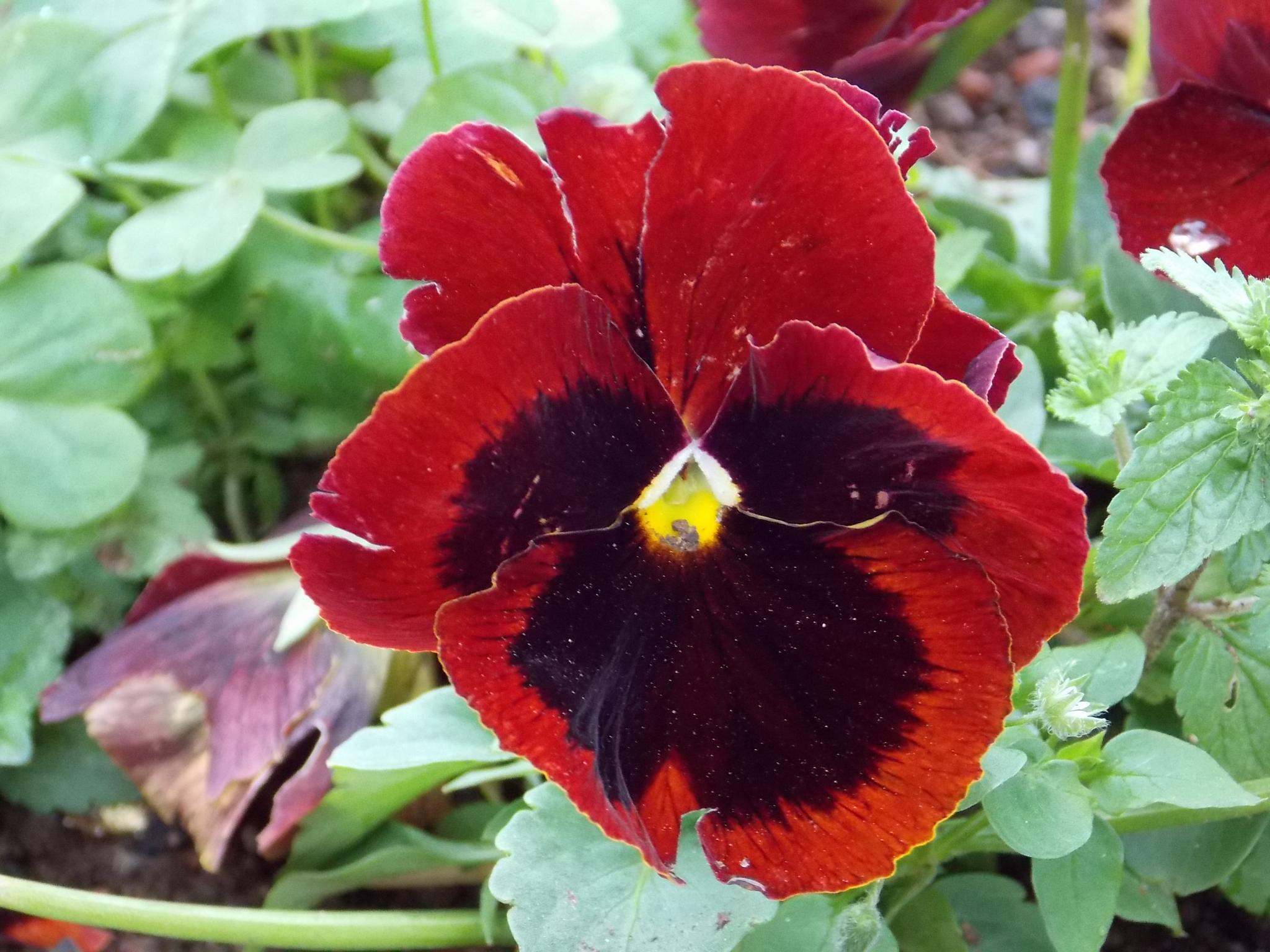 Flower by william_issa