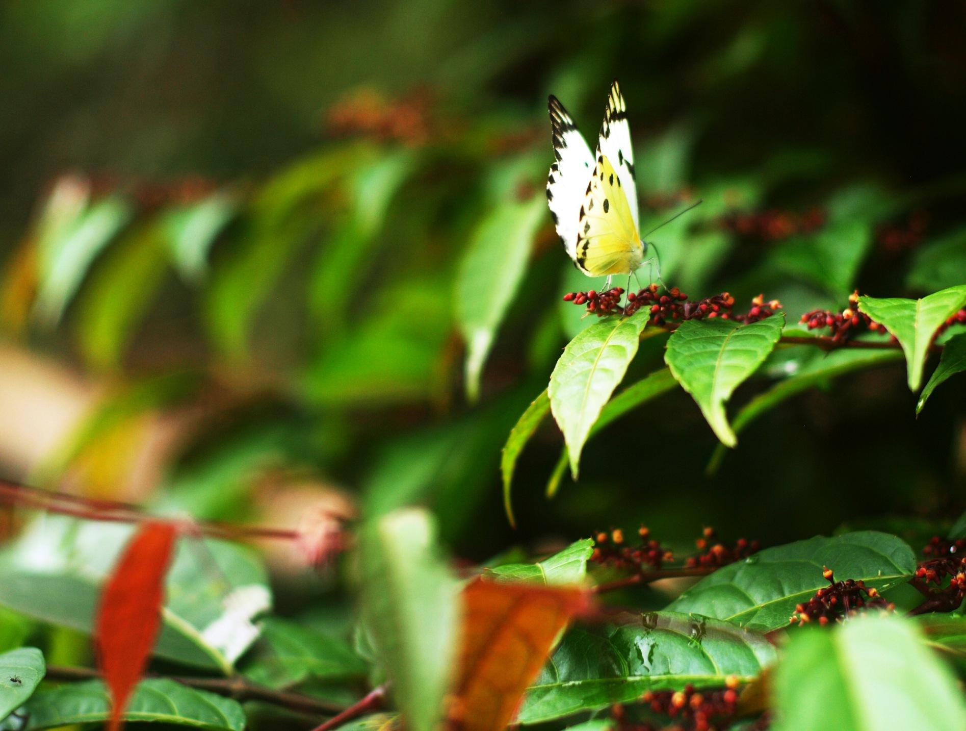 Butterfly by sahrsorie