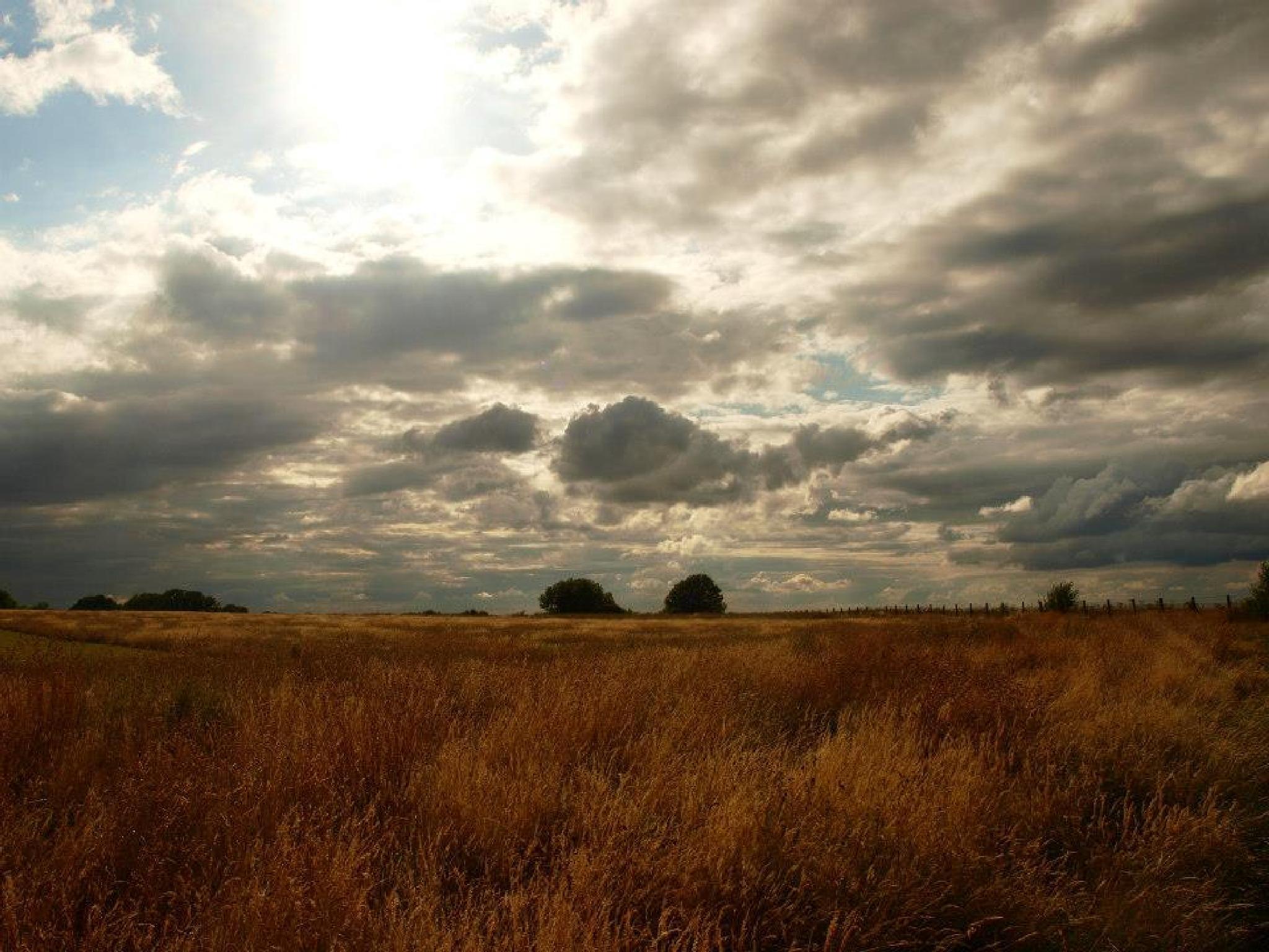 Grass on landscape by sahrsorie