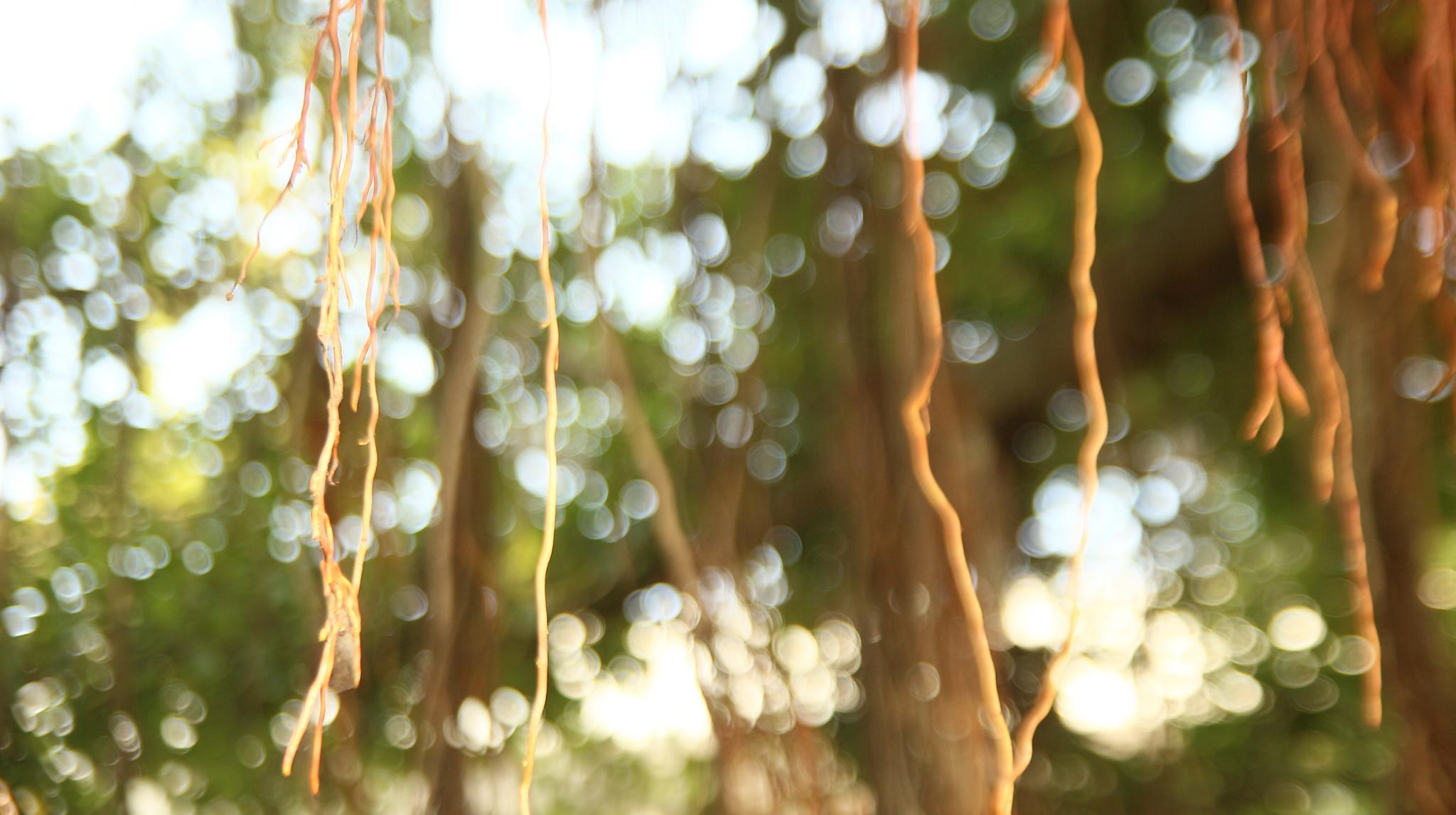 light-roots by GitiThadani