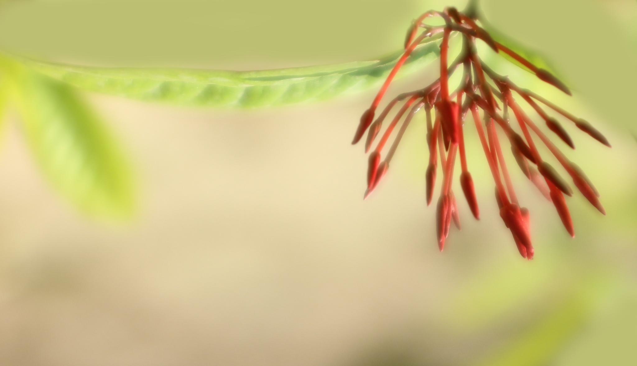 slender-tender floral forms by GitiThadani